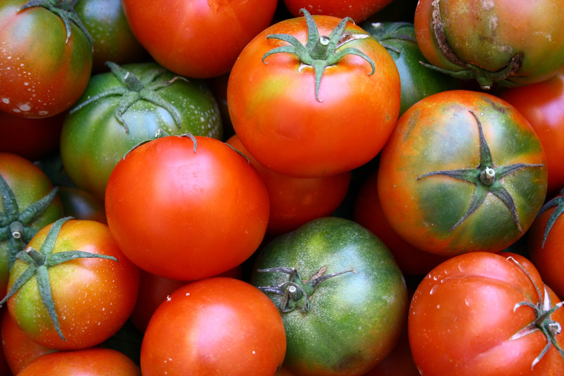Tips for Growing Tomatoes   The Old Farmer's Almanac