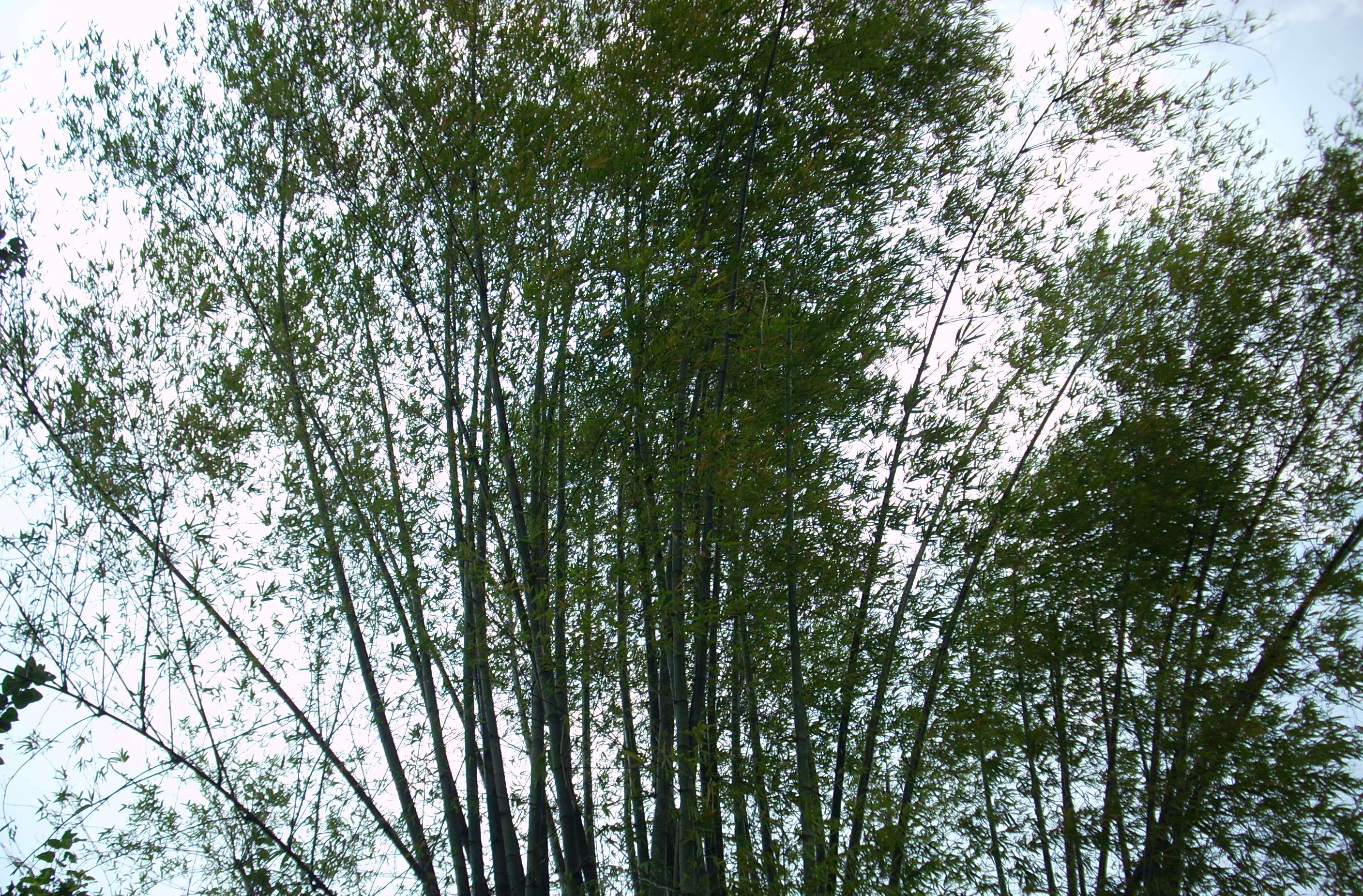 Top of the Trees, Blow, Branches, Green, Leafs, HQ Photo