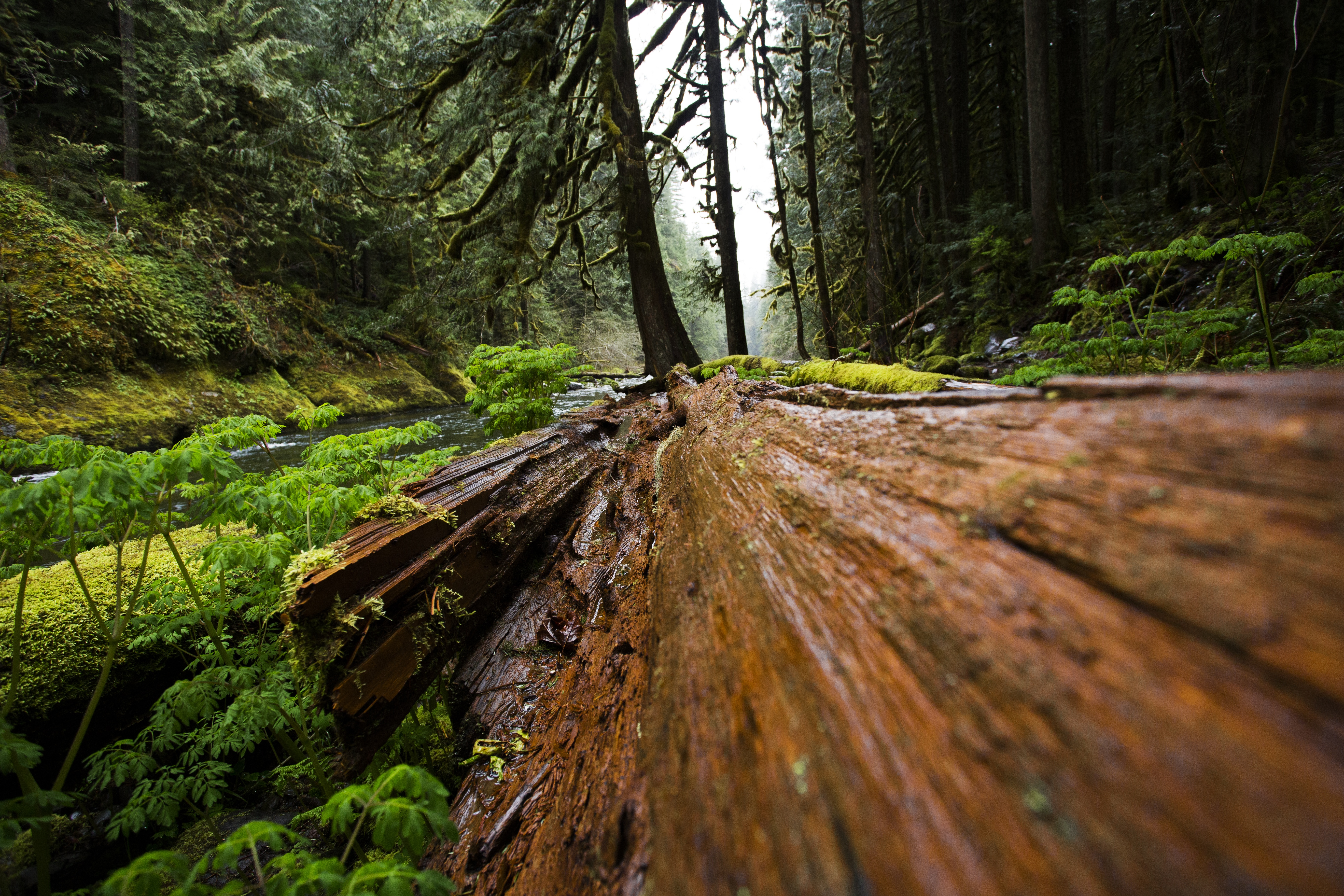 Free Photo Torn Apart Tree Tree Wood Woods Free