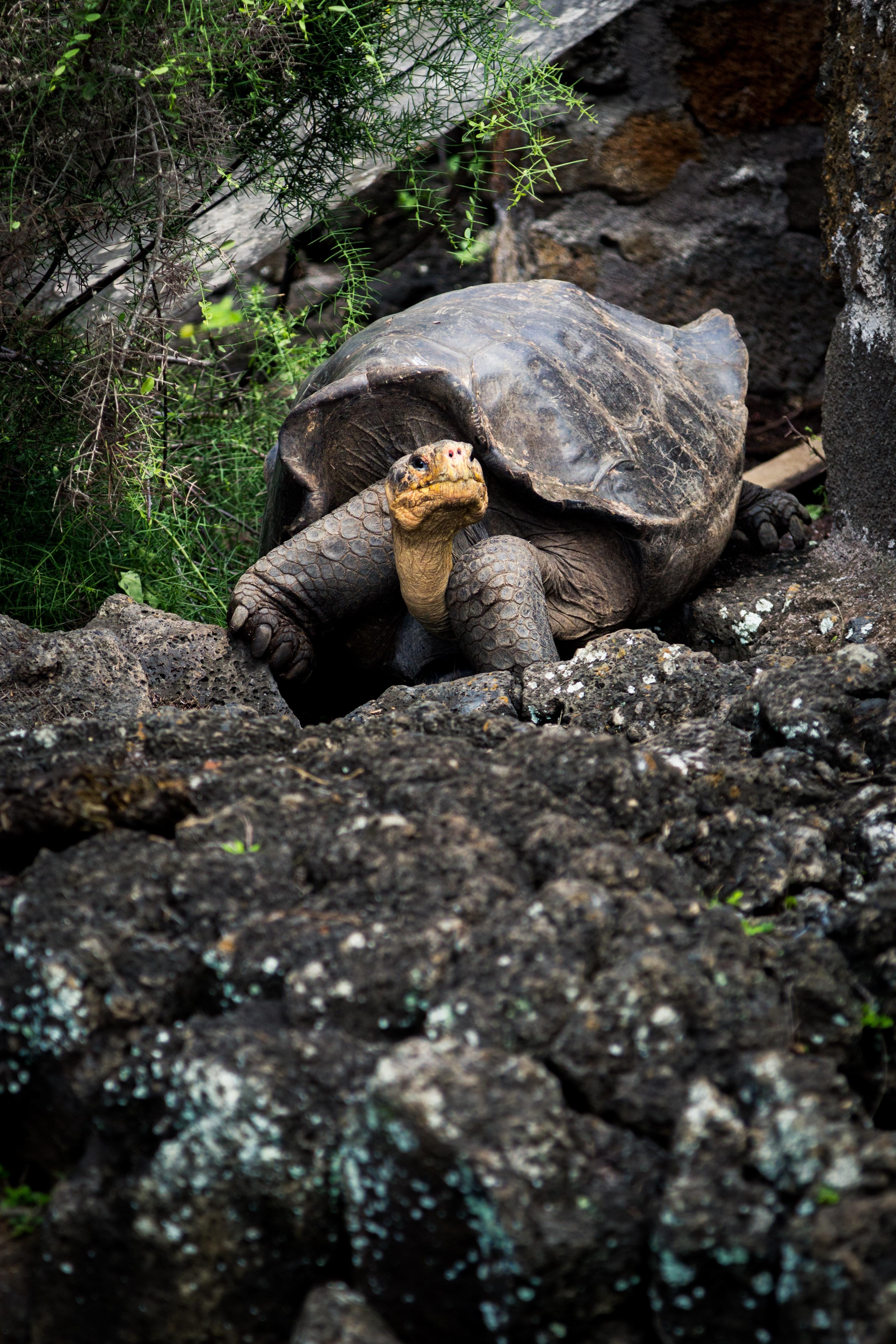 Tortoise on rock photo