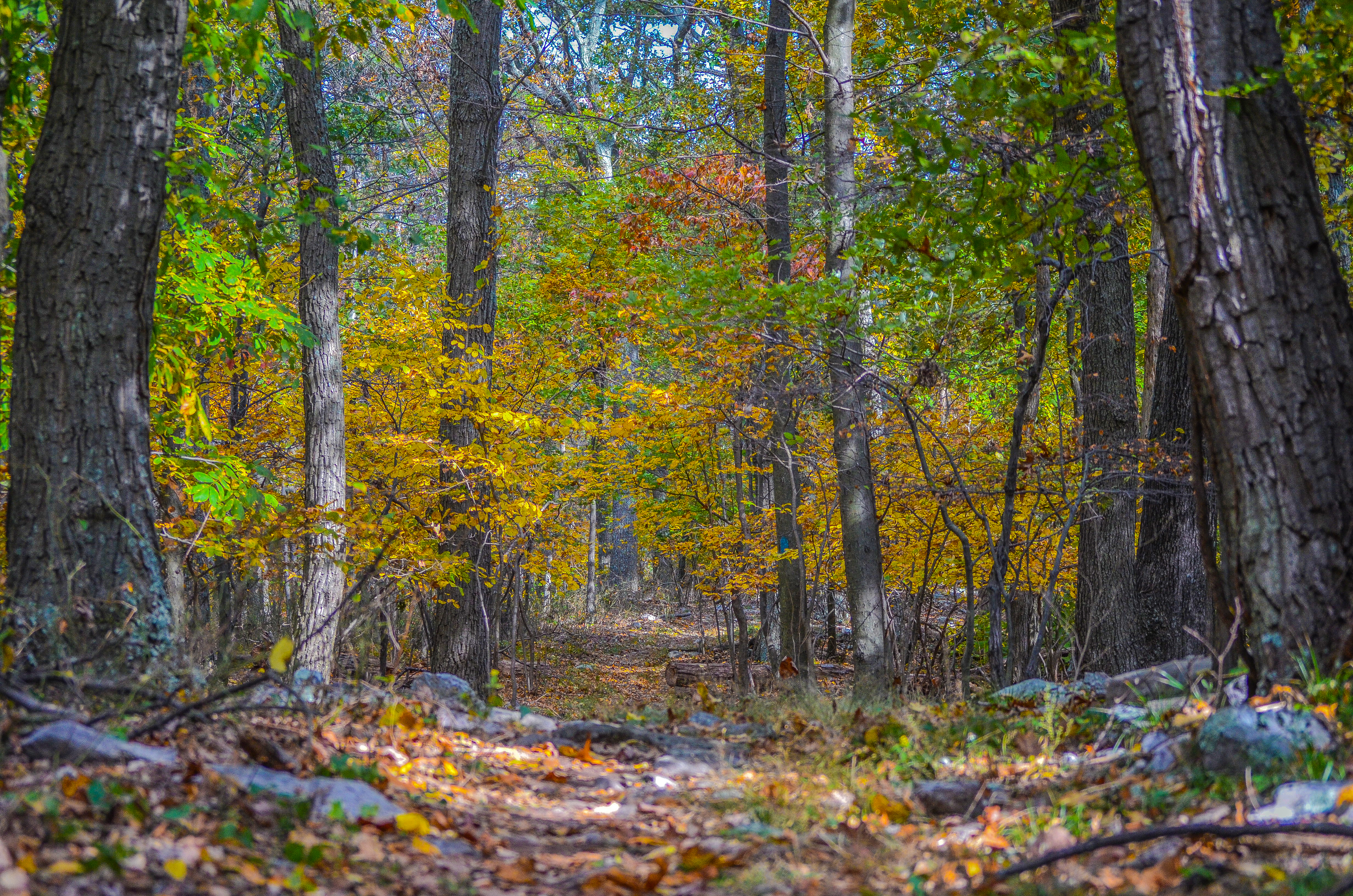 Trail on Loudoun Heights, Creek, Foliage, Forest, Landscape, HQ Photo