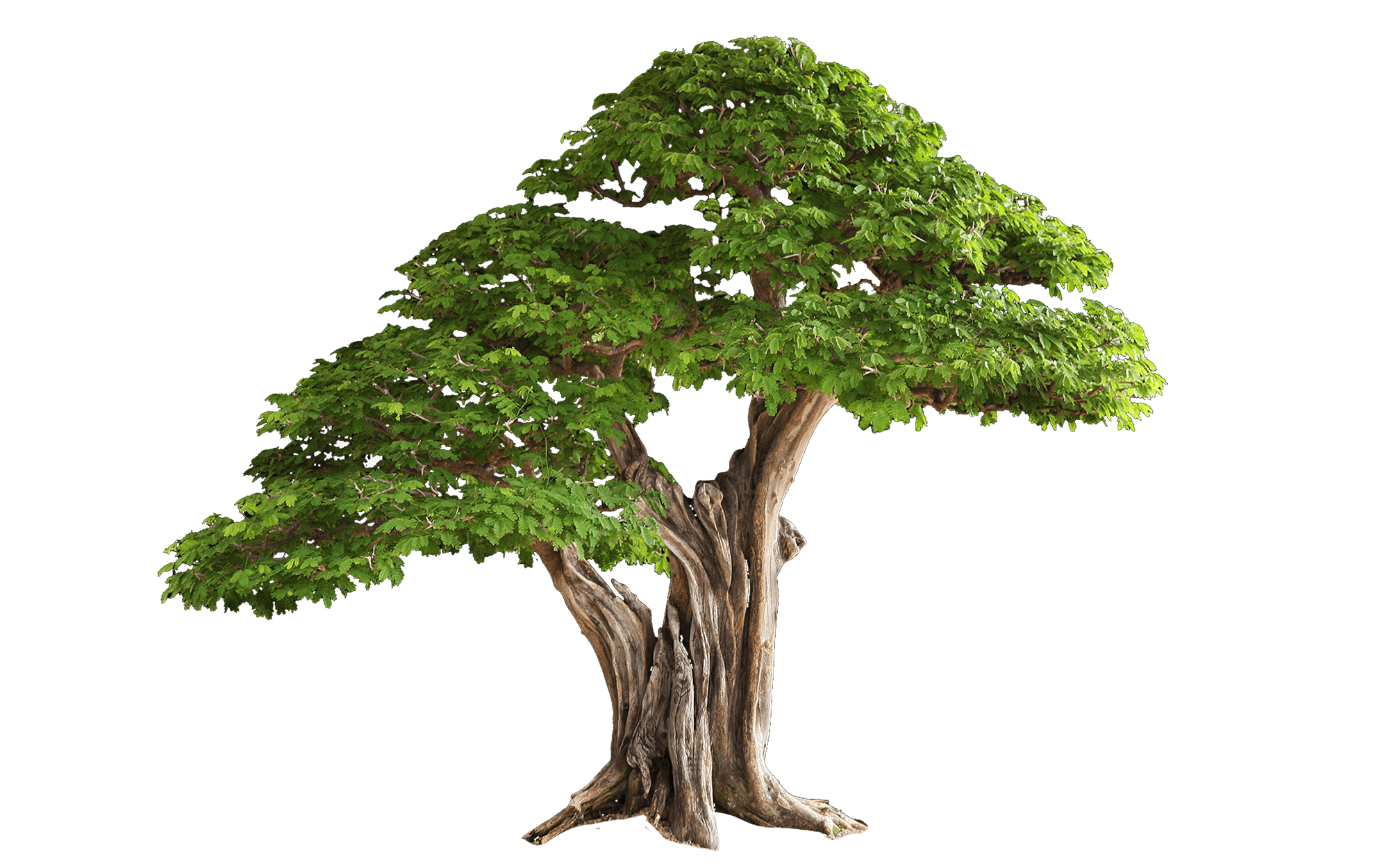 Tree PNG Transparent Images | PNG All
