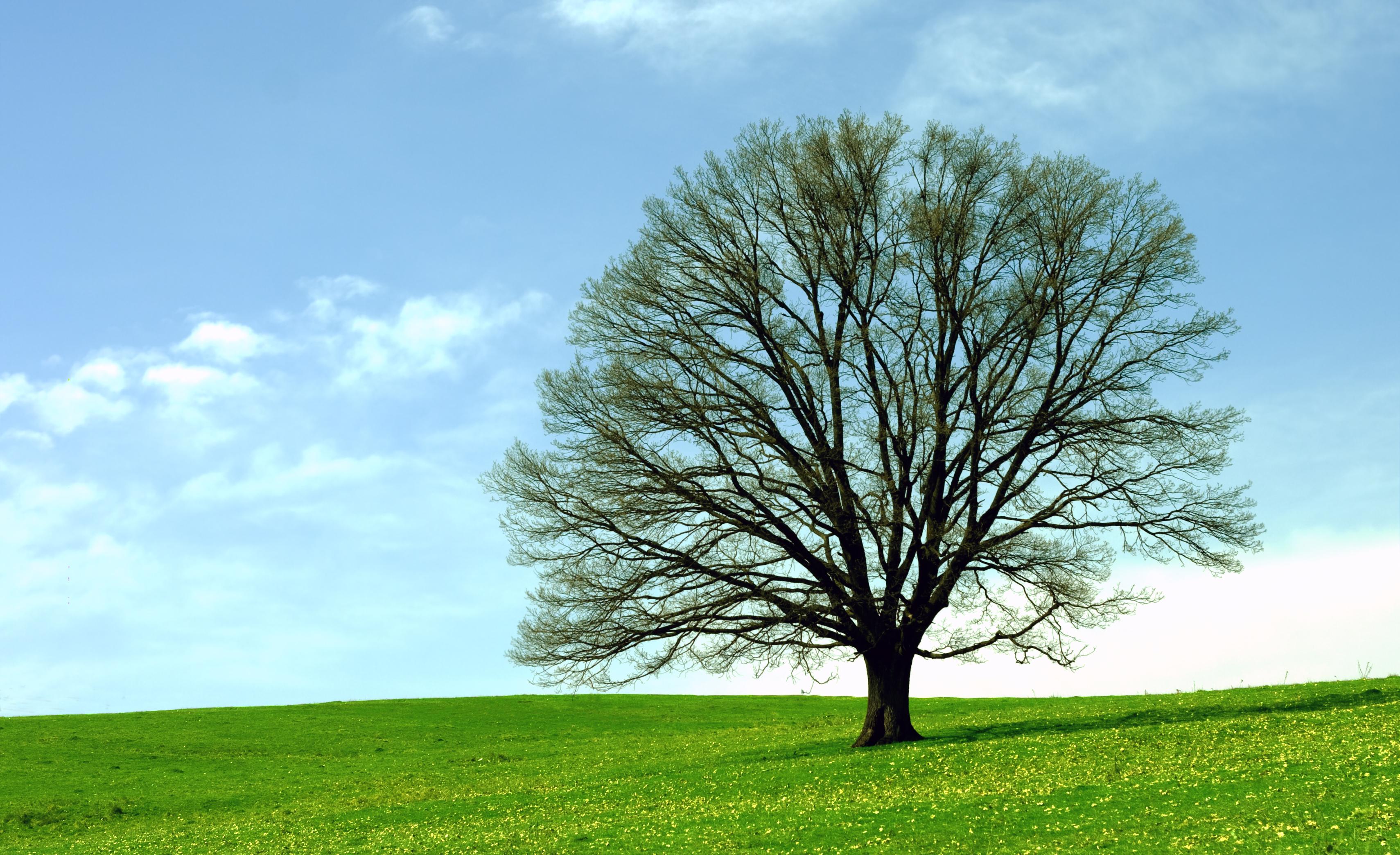 3420x2088px Tree 4897.88 KB #352174