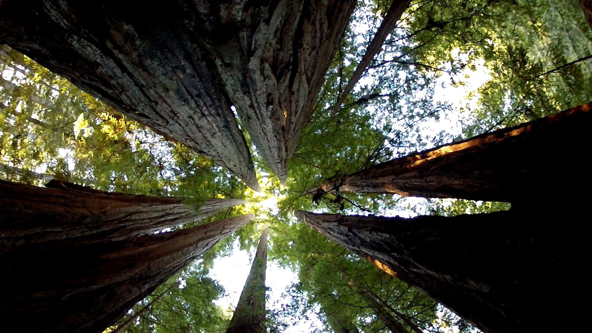 The Most Amazing Thing About Trees - YouTube