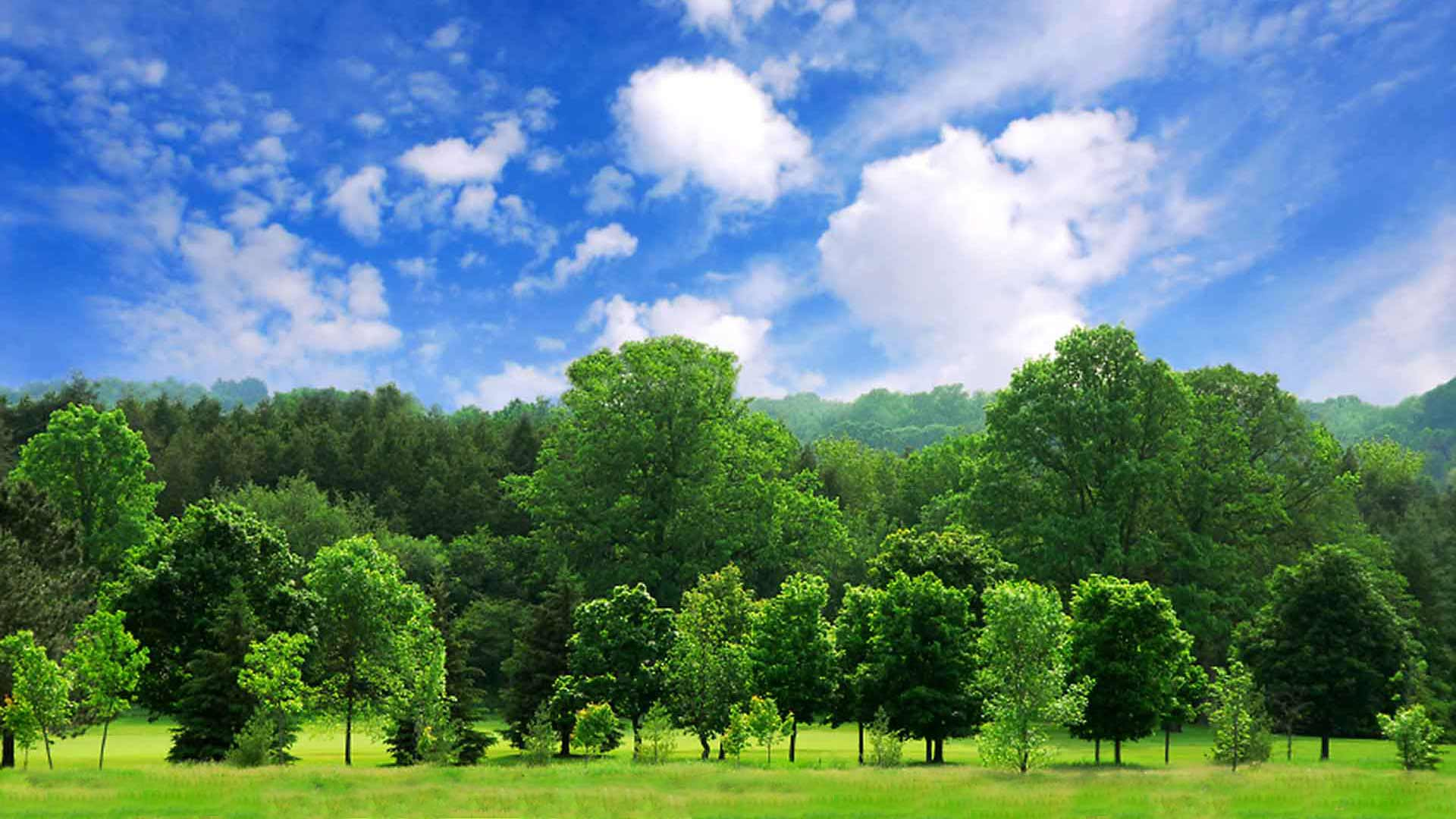 Reference Information for Tree Care Providers - Boonsboro, Maryland
