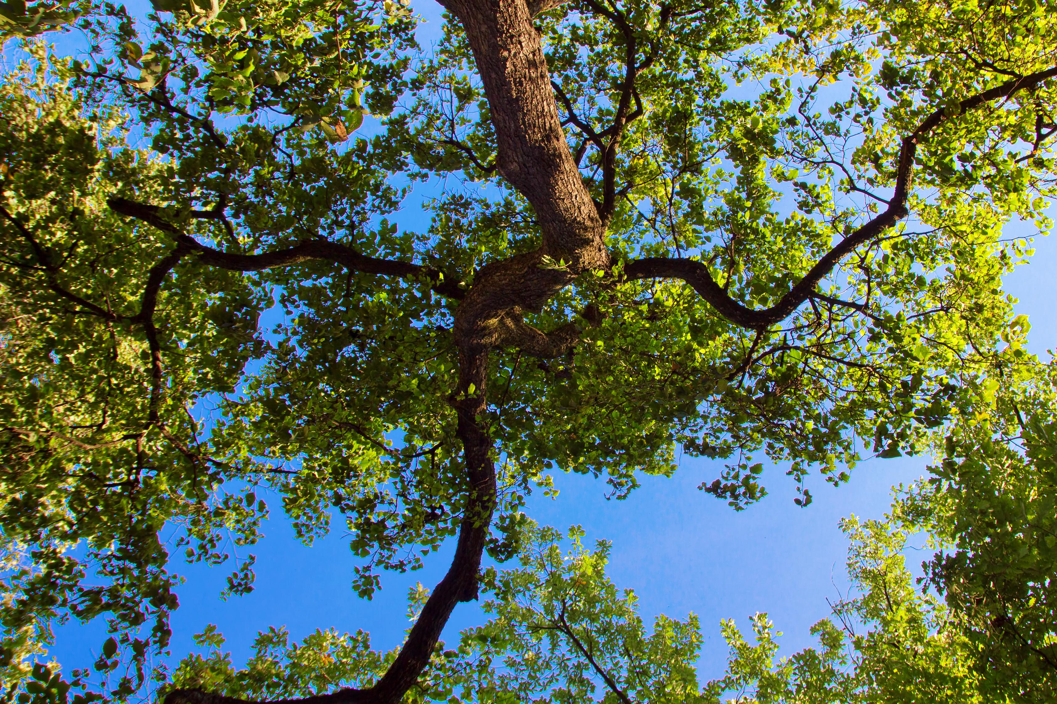 Tree, Wallpaper, Shine, Plants, Quiet, HQ Photo