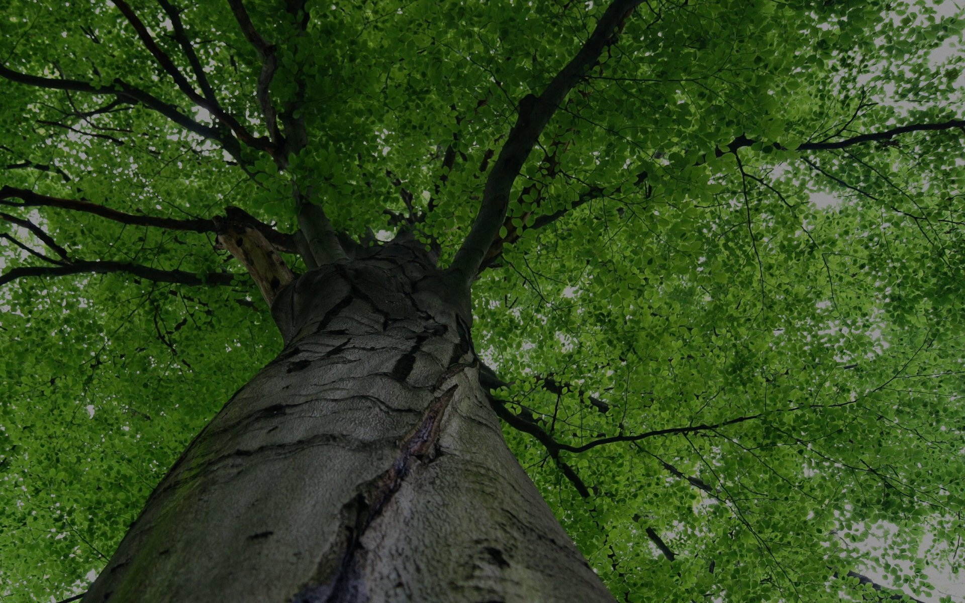 Alpine Tree Co. LLC | Stump Grinding | Stafford Springs, CT