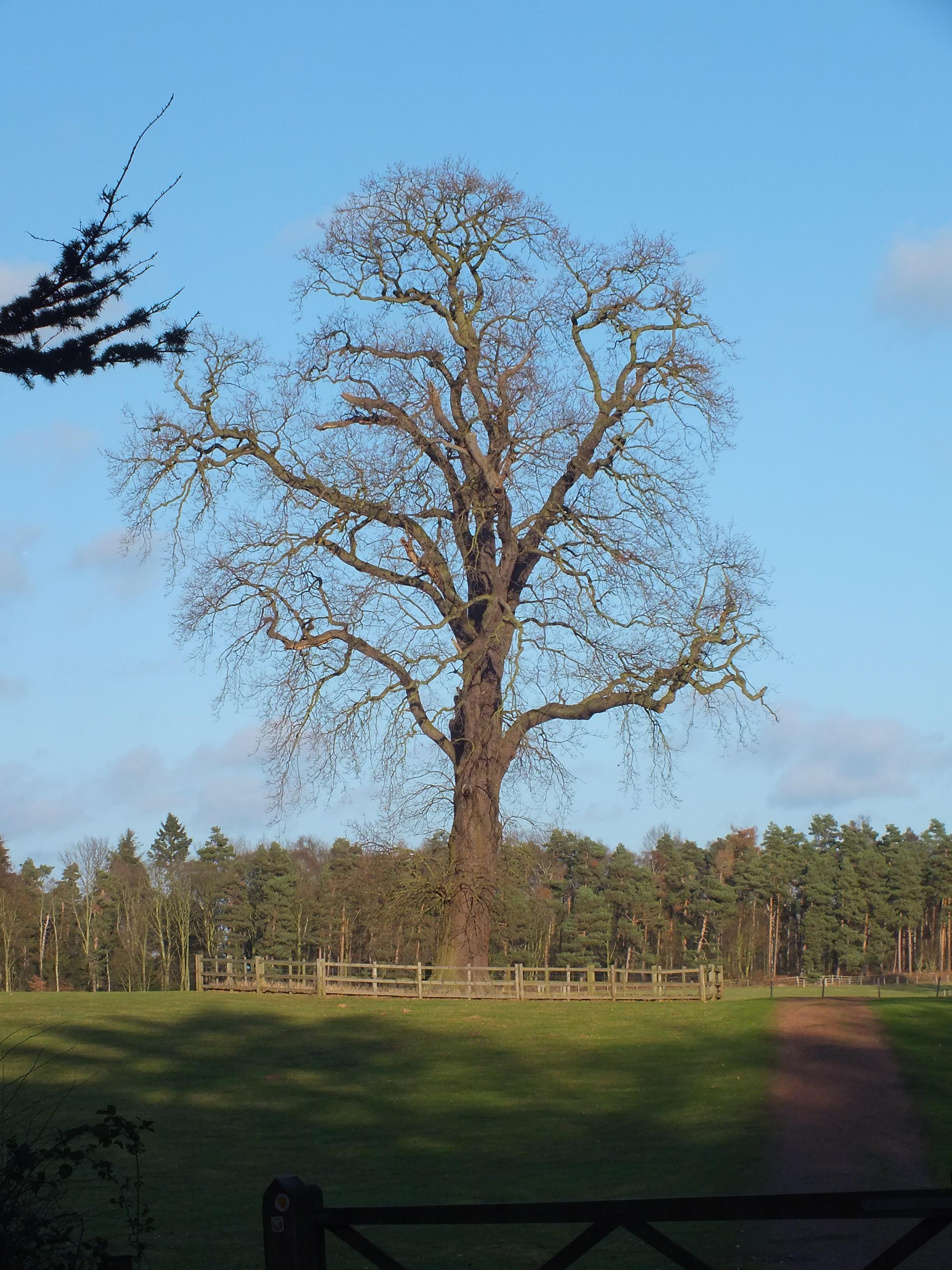 Tree, HQ Photo