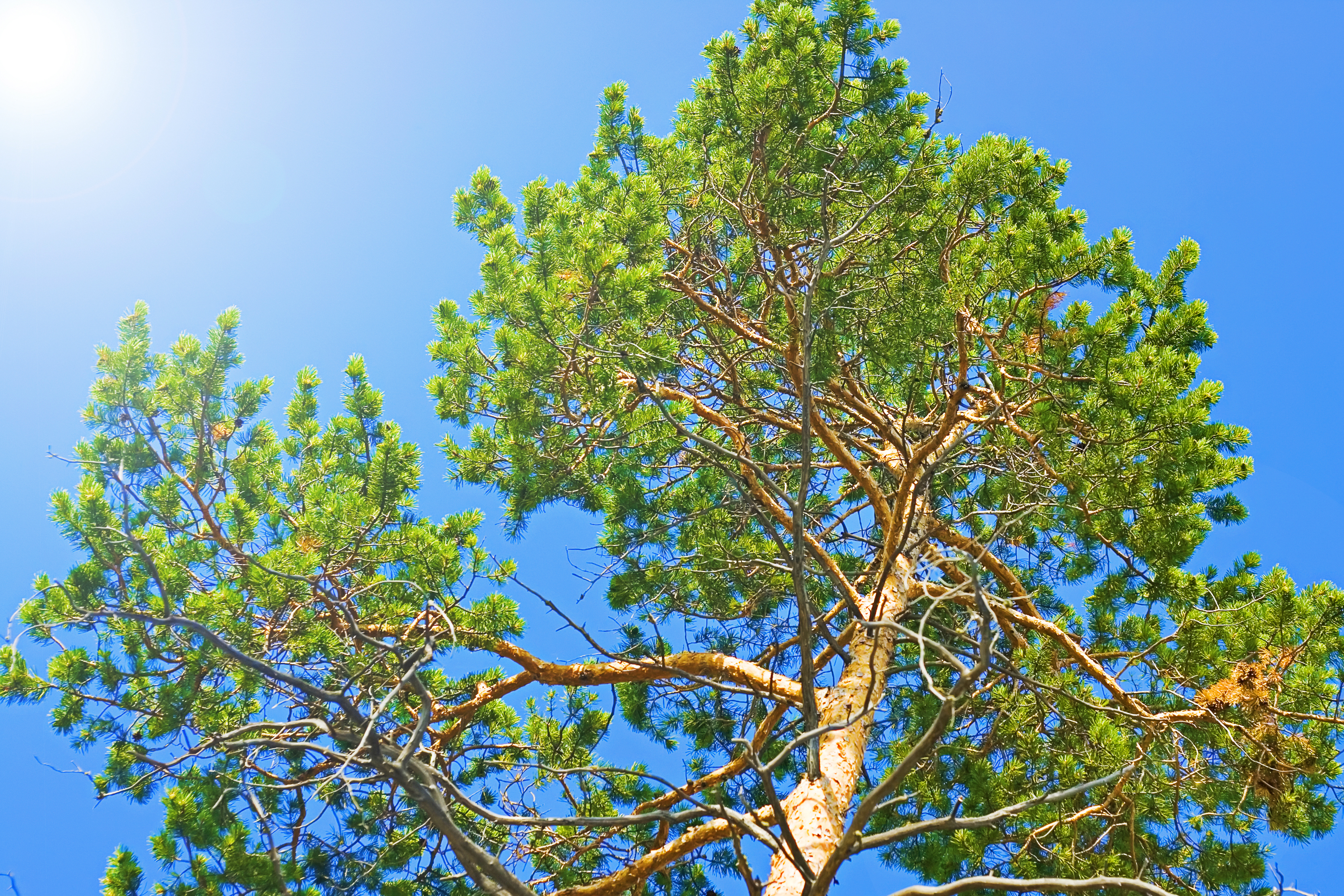 tree, Purity, Tranquil, Sunlight, Summer, HQ Photo