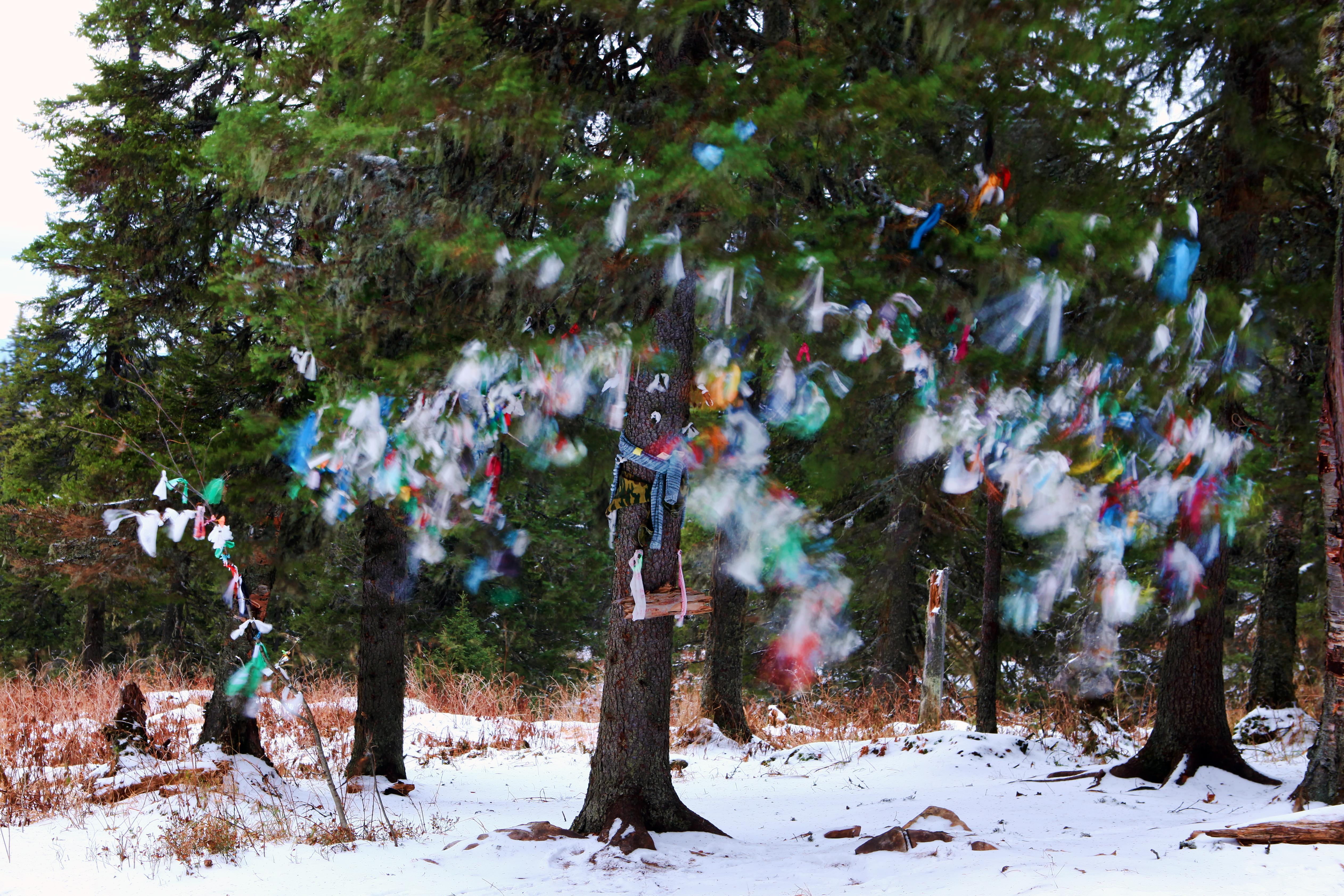 Tree, Accessories, Hanging, Junk, Snow, HQ Photo