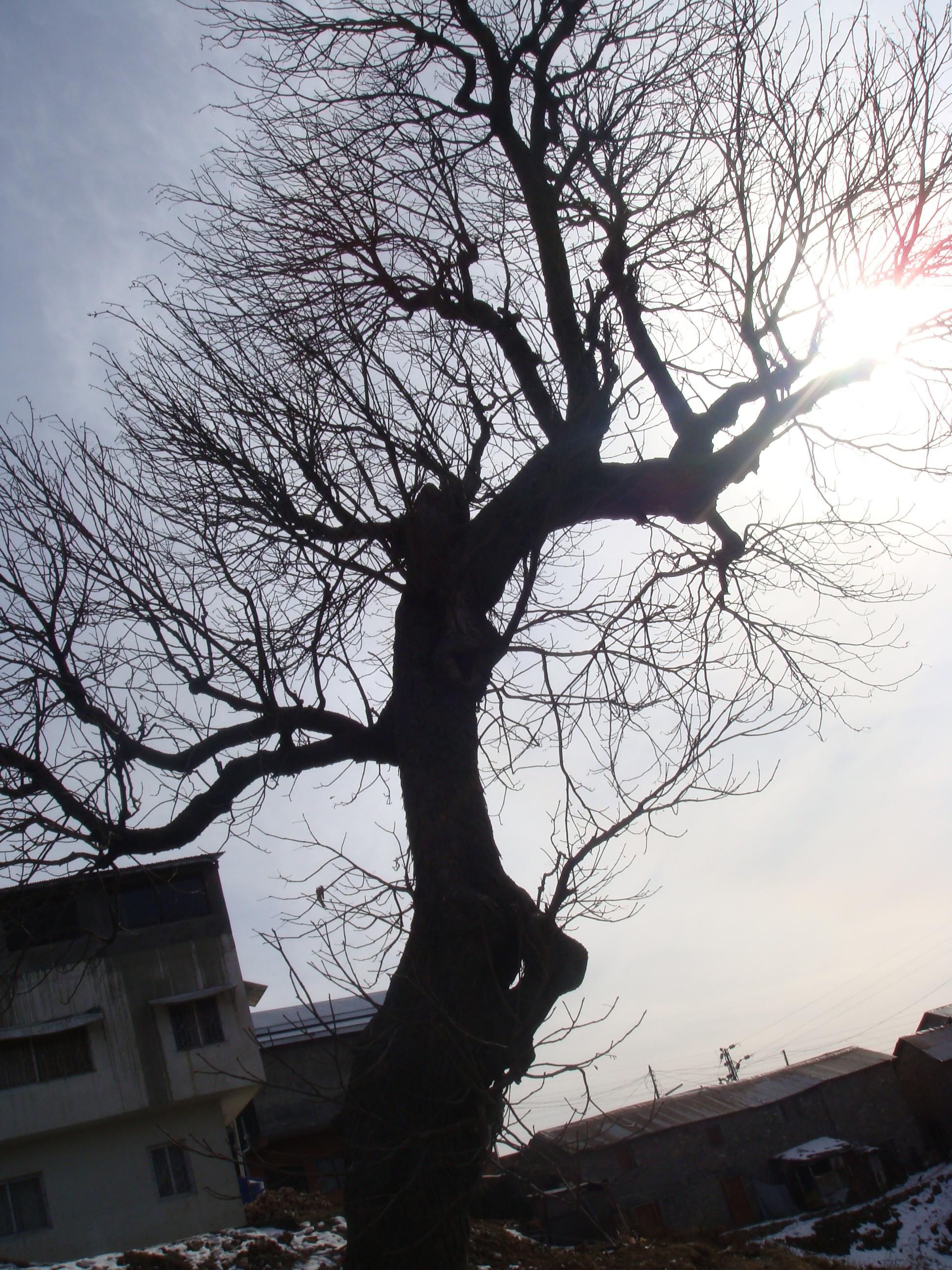 Tree, Branches, Dark, Evening, Jungle, HQ Photo