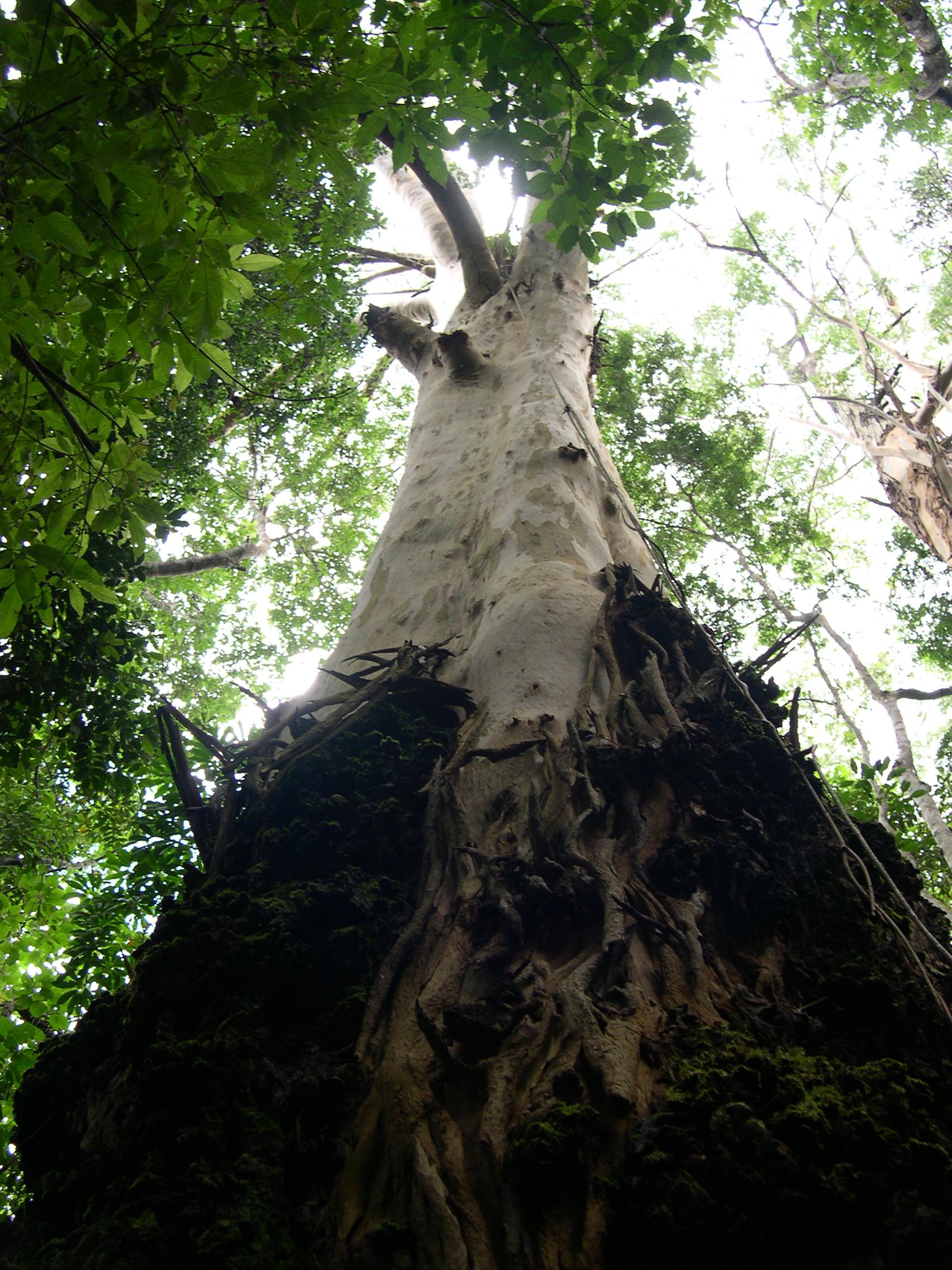 Tree, Bark, View, Trunk, Tall, HQ Photo