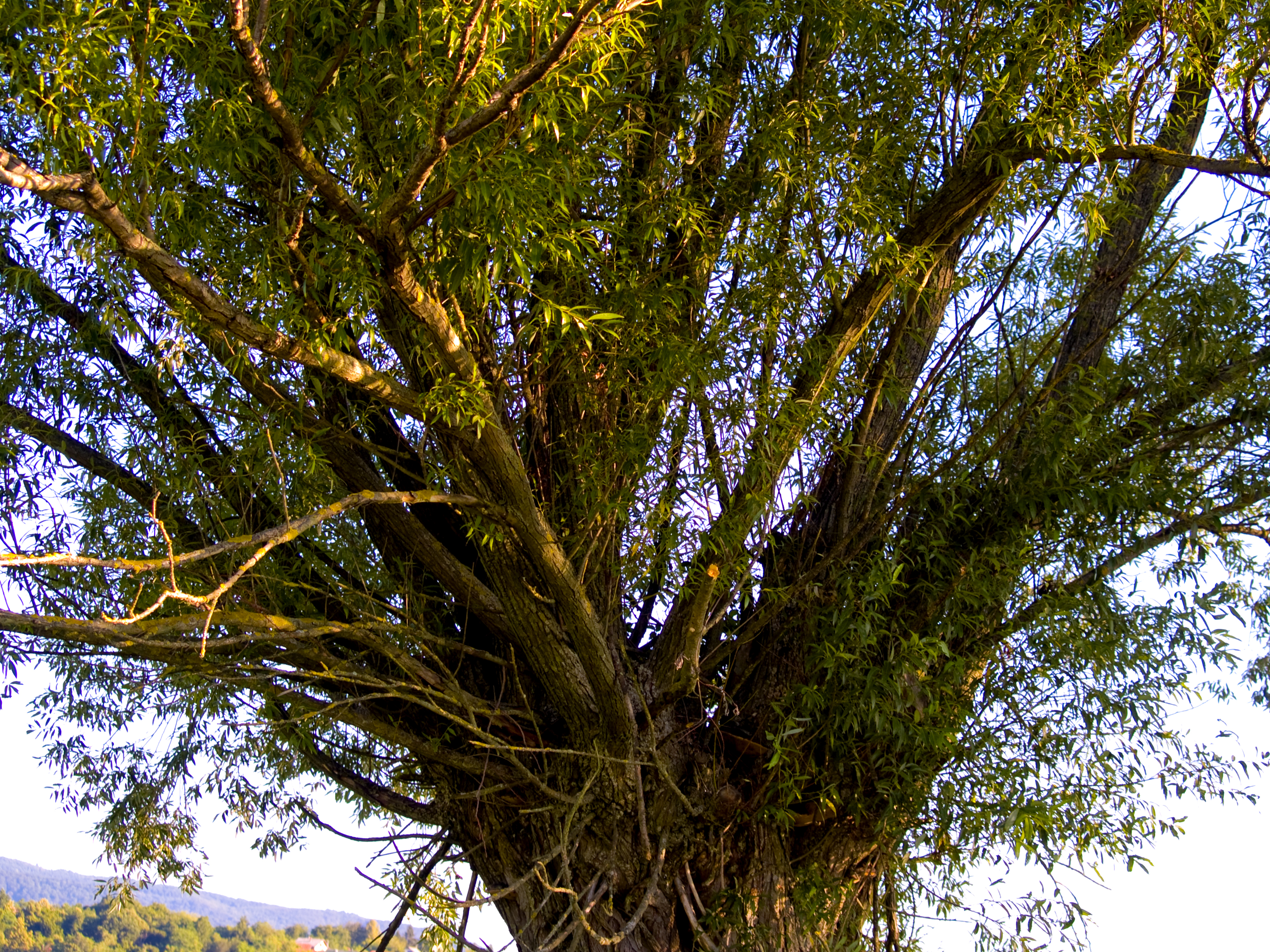 Tree, Abstract, Branches, Green, Grow, HQ Photo