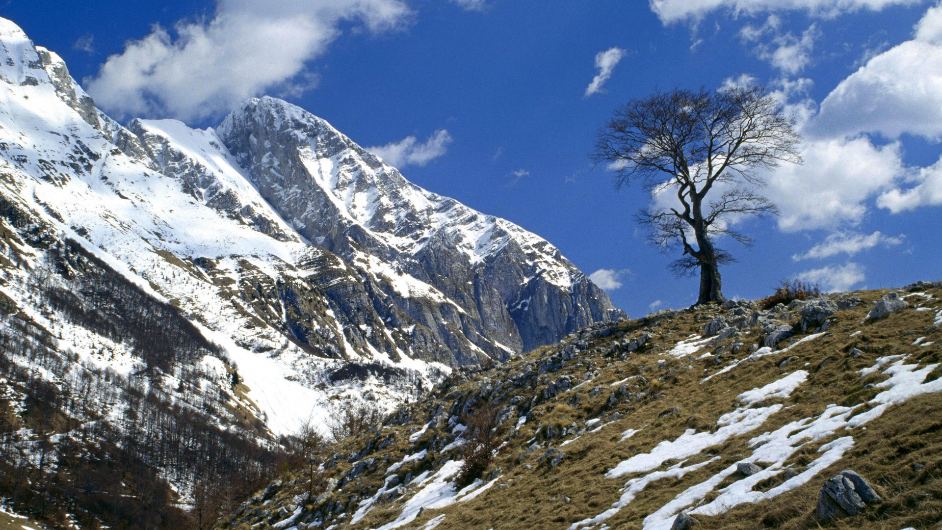 Lonely tree on the mountain wallpapers and images - wallpapers ...