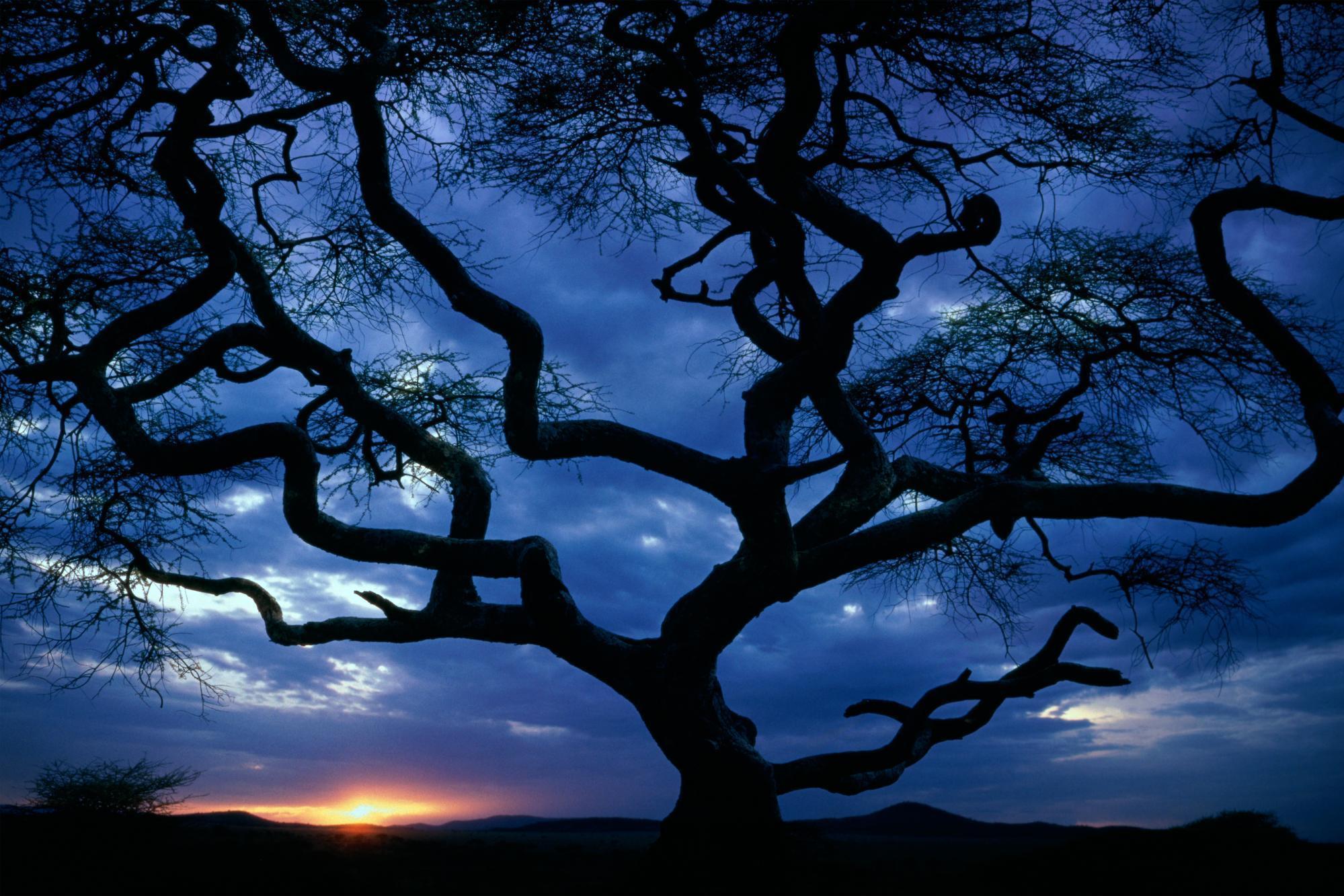 Free photo: Tree at Night - Outdoor, Single, Sky - Free ...