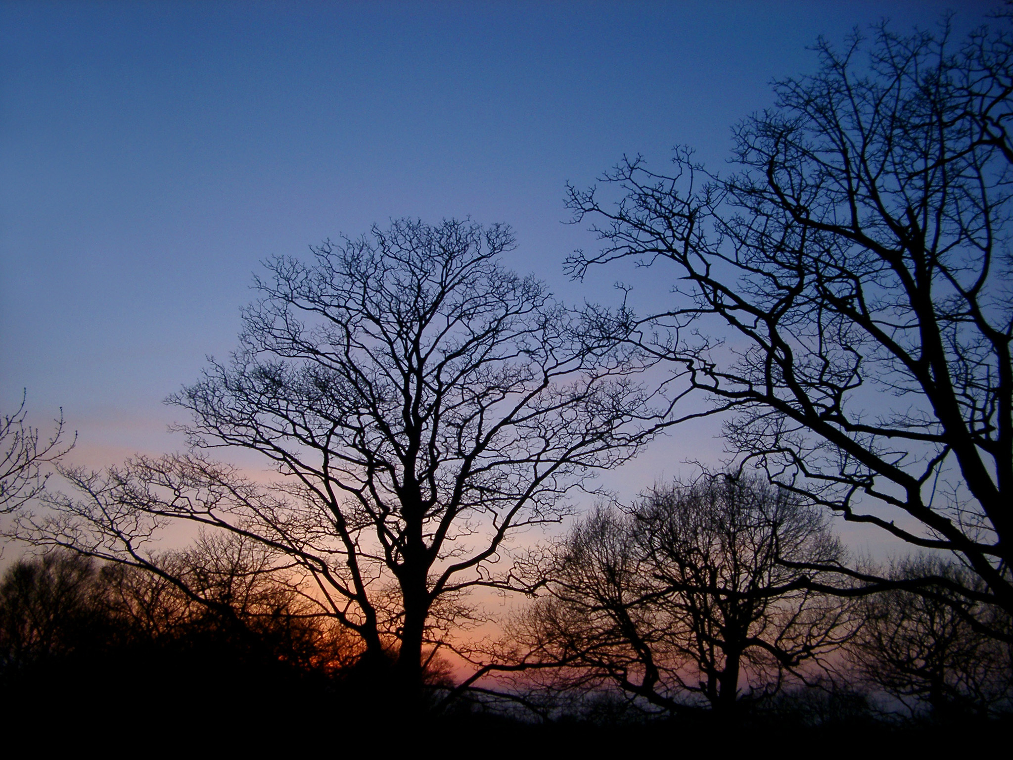 Free Stock photo of Silhouettes of bare deciduous trees at twilight ...