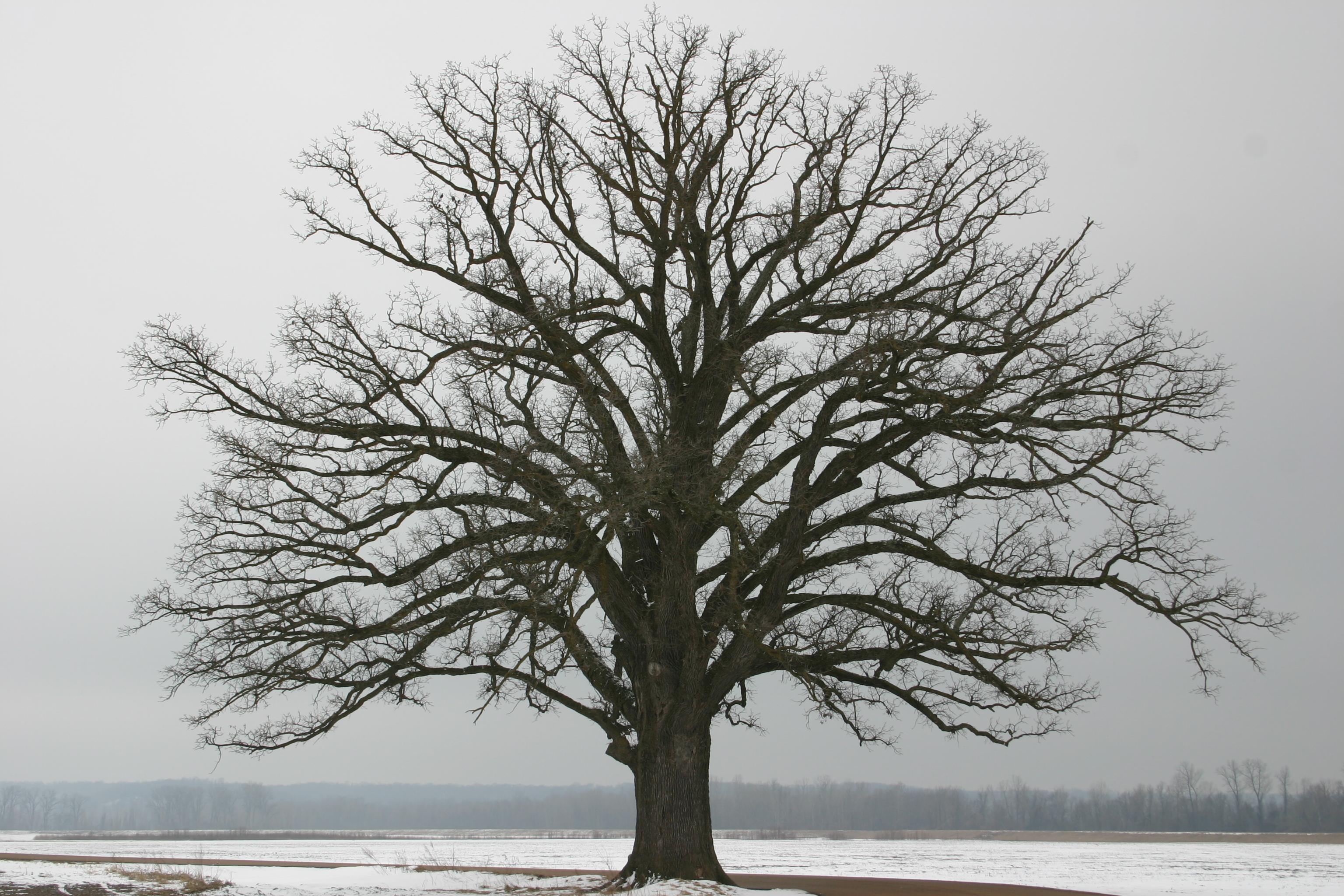Winter Tree Care Tips - Full Circle Tree & Shrub