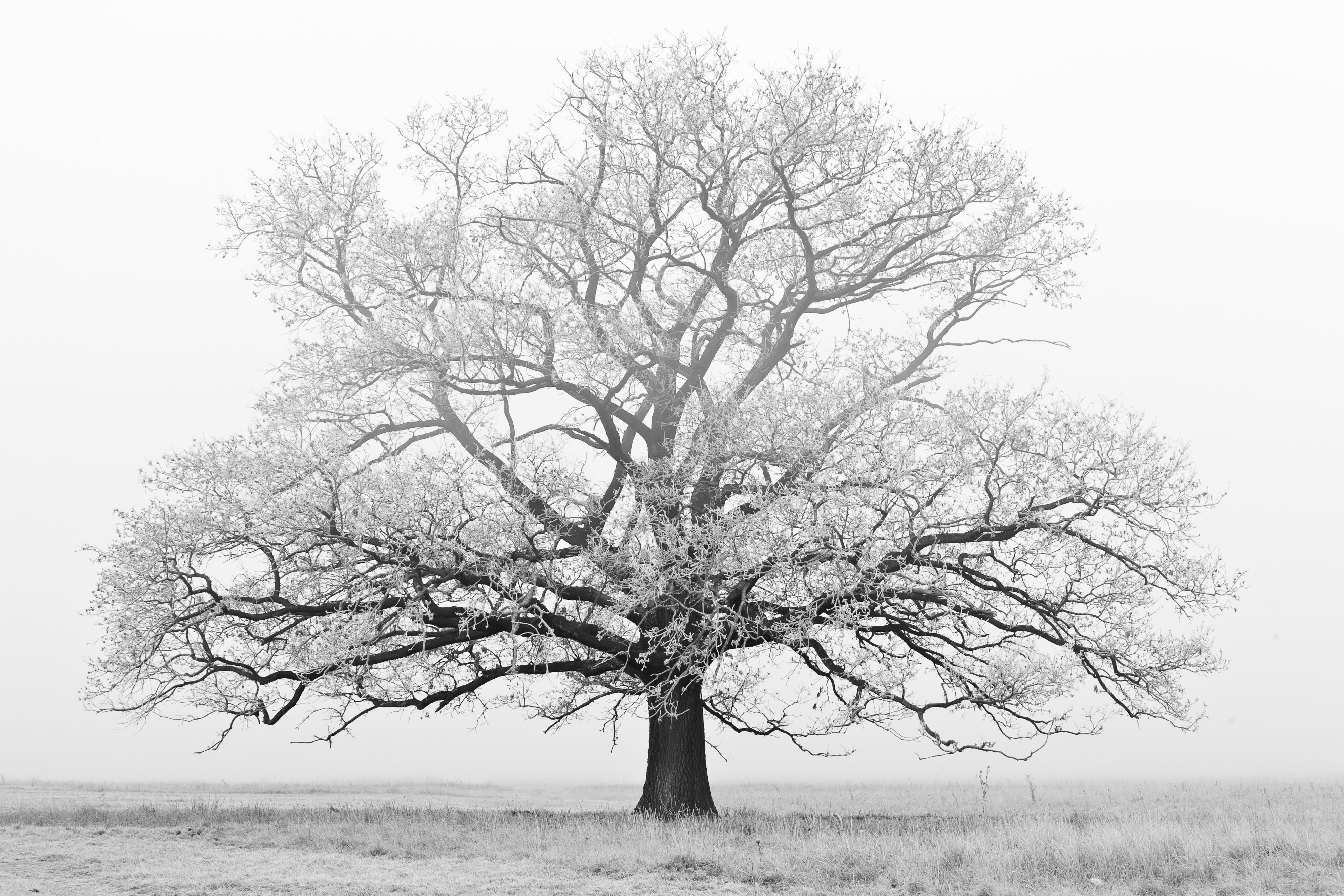 Winter Tree | Free Photo Winter Tree White Winter Tree Free Download Jooinn