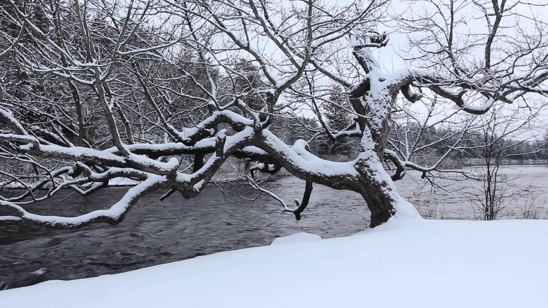 Snowfall, Winter Tree and River Flowing - 1 hr Soundscape, Relaxing ...