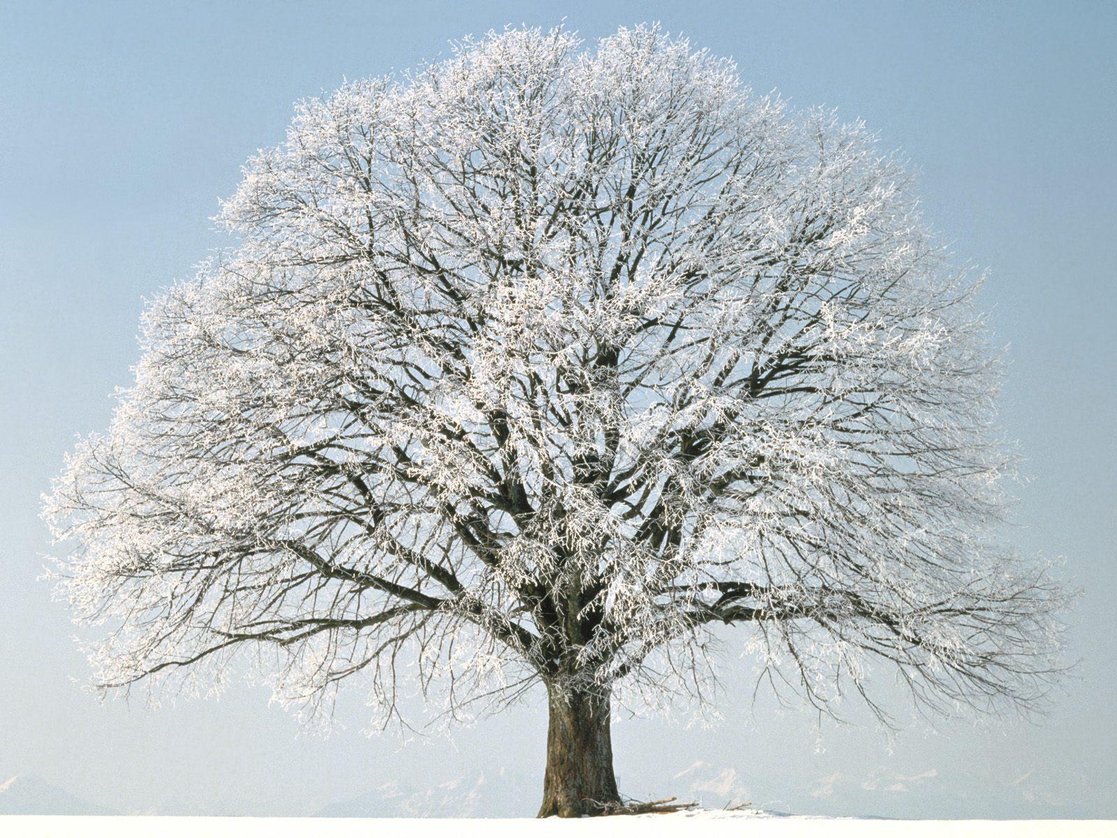 Images: 712124-winter-tree-desktop-wallpaper-1600x1200