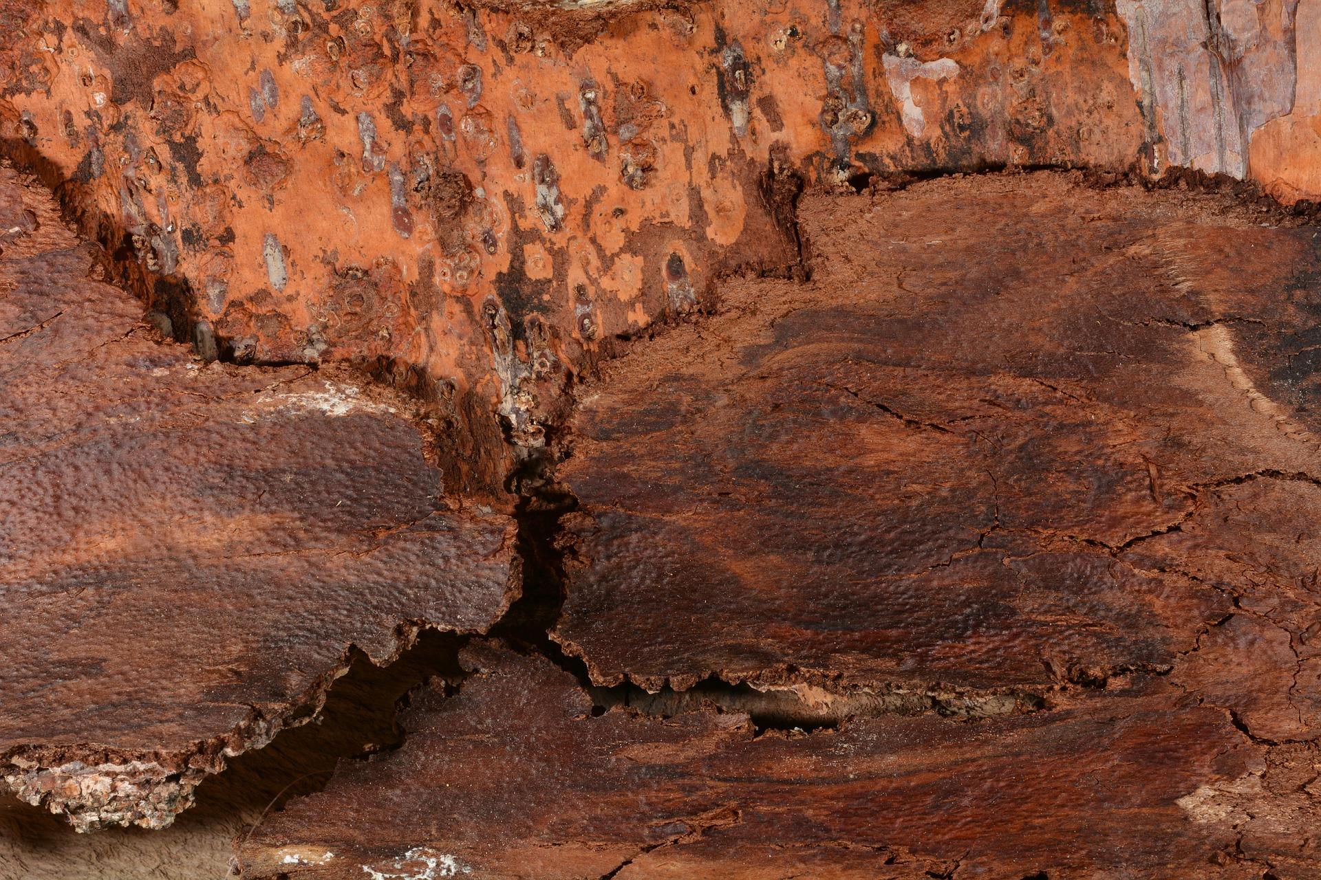 Tree Bark, Bark, Brown, Texture, Tree, HQ Photo
