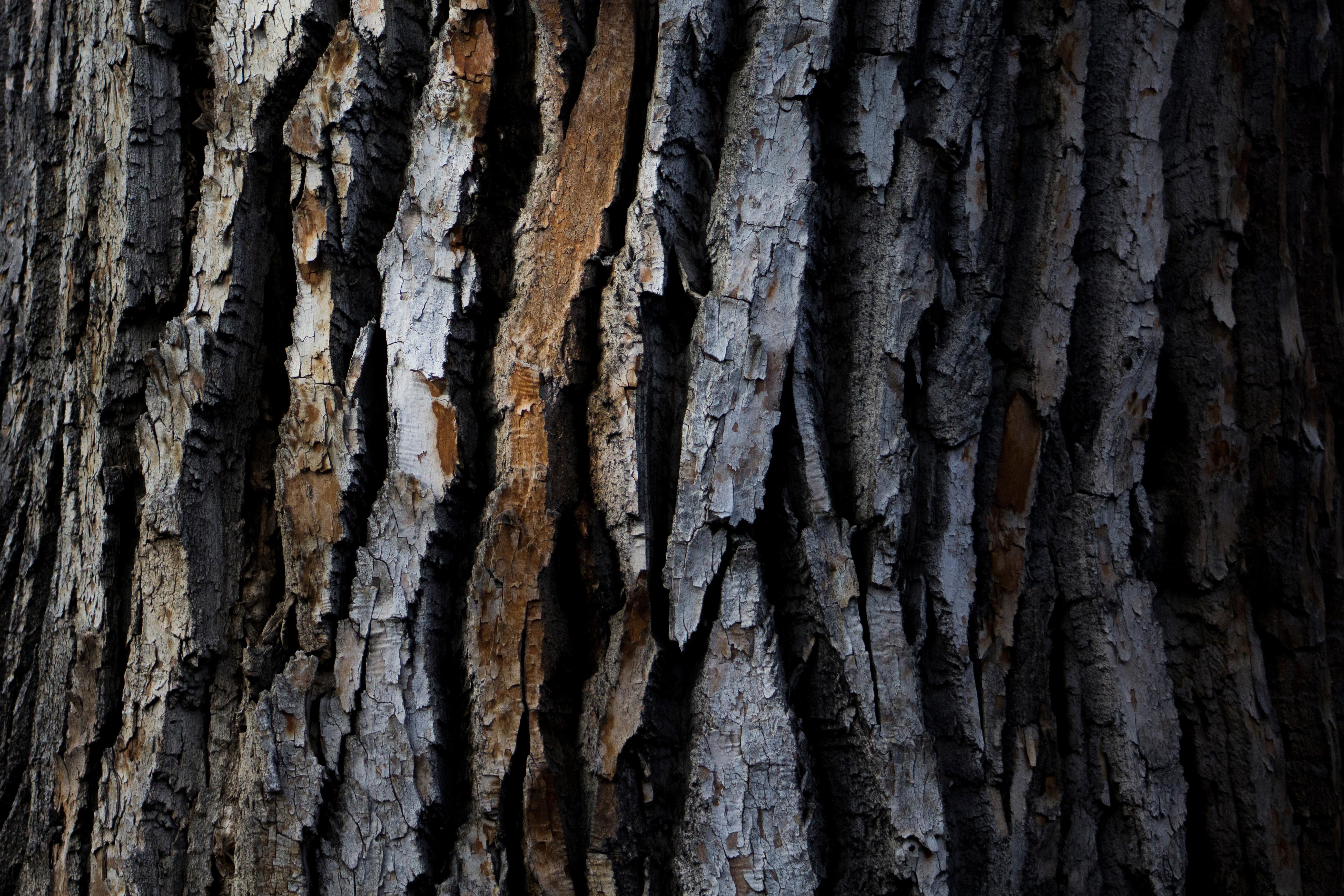 Tree Bark Texture Free Photo - ISO Republic