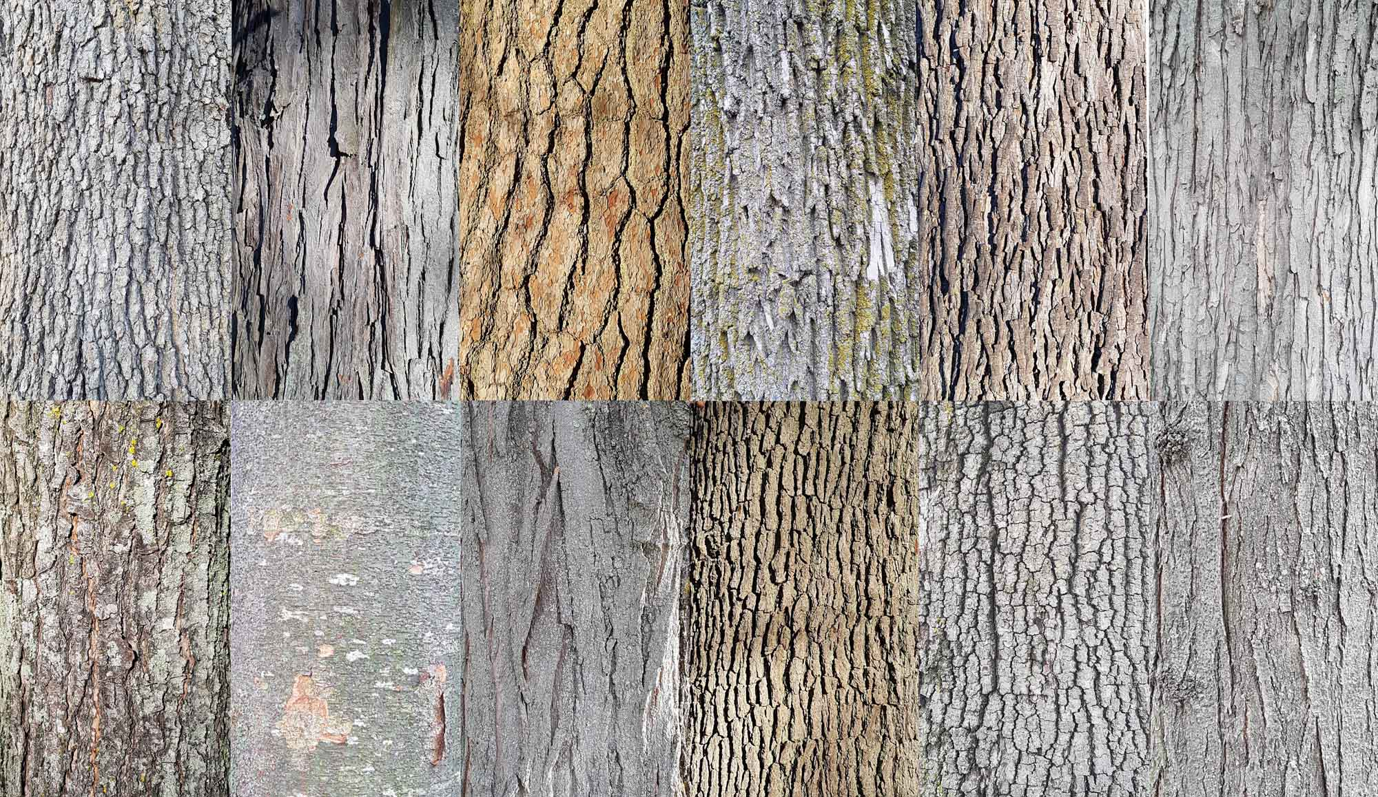 Better know your tree bark | Village 14