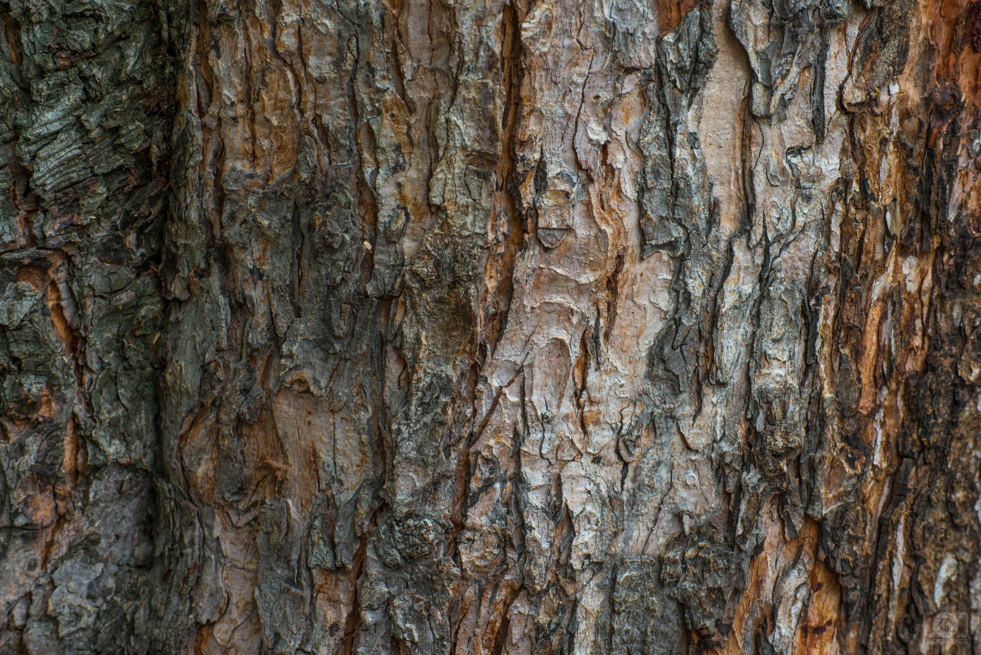 Tree Bark Background - High-quality Free Backgrounds