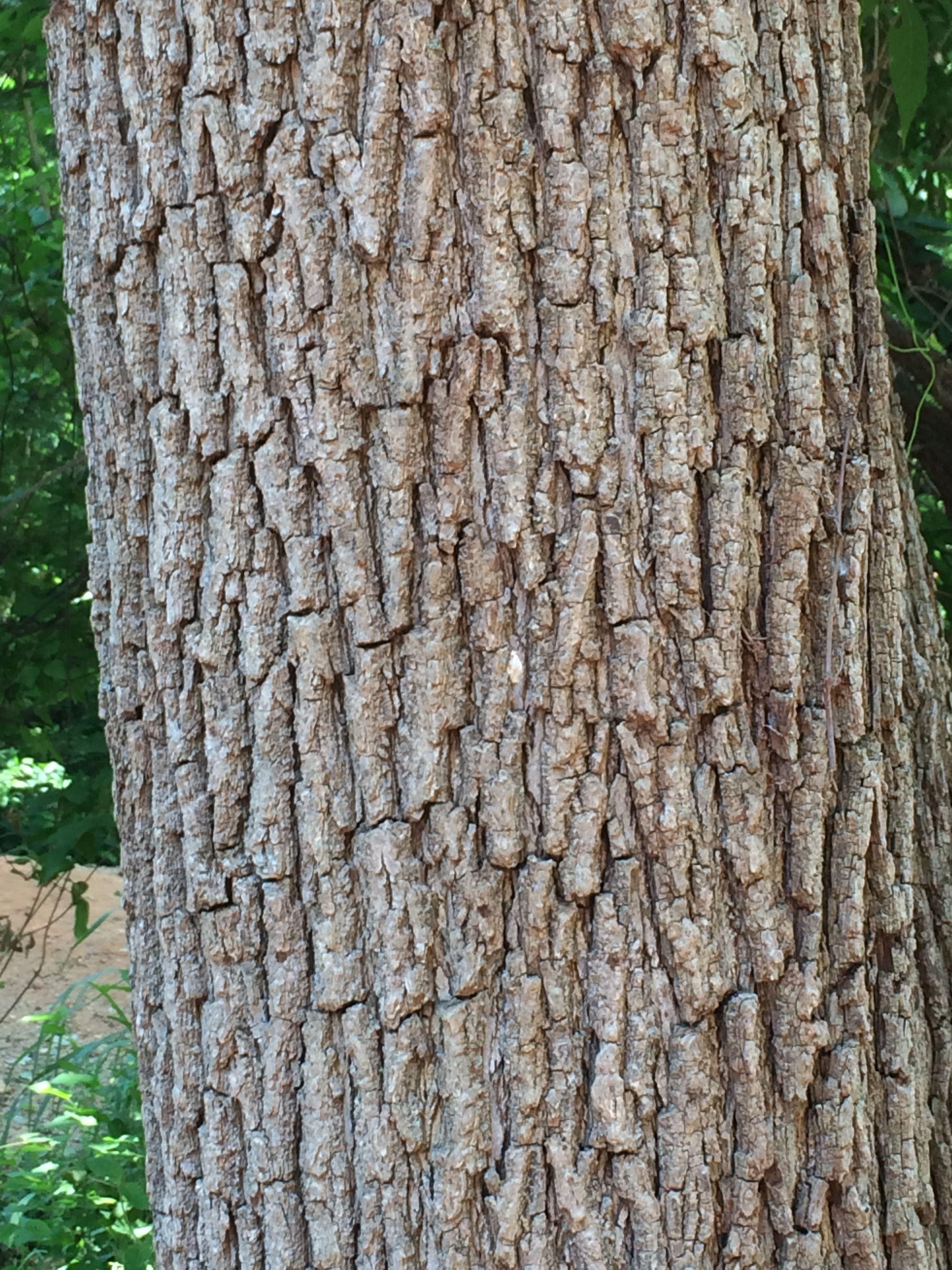IMG_8780.jpg (2448×3264) Oak Bark | Tree Barks | Pinterest | Barking ...