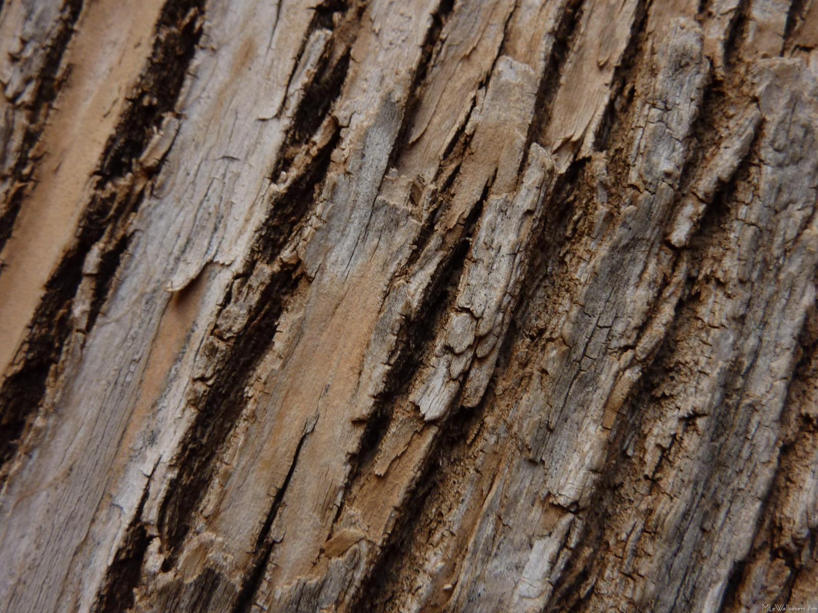 MLeWallpapers.com - Tree Bark I