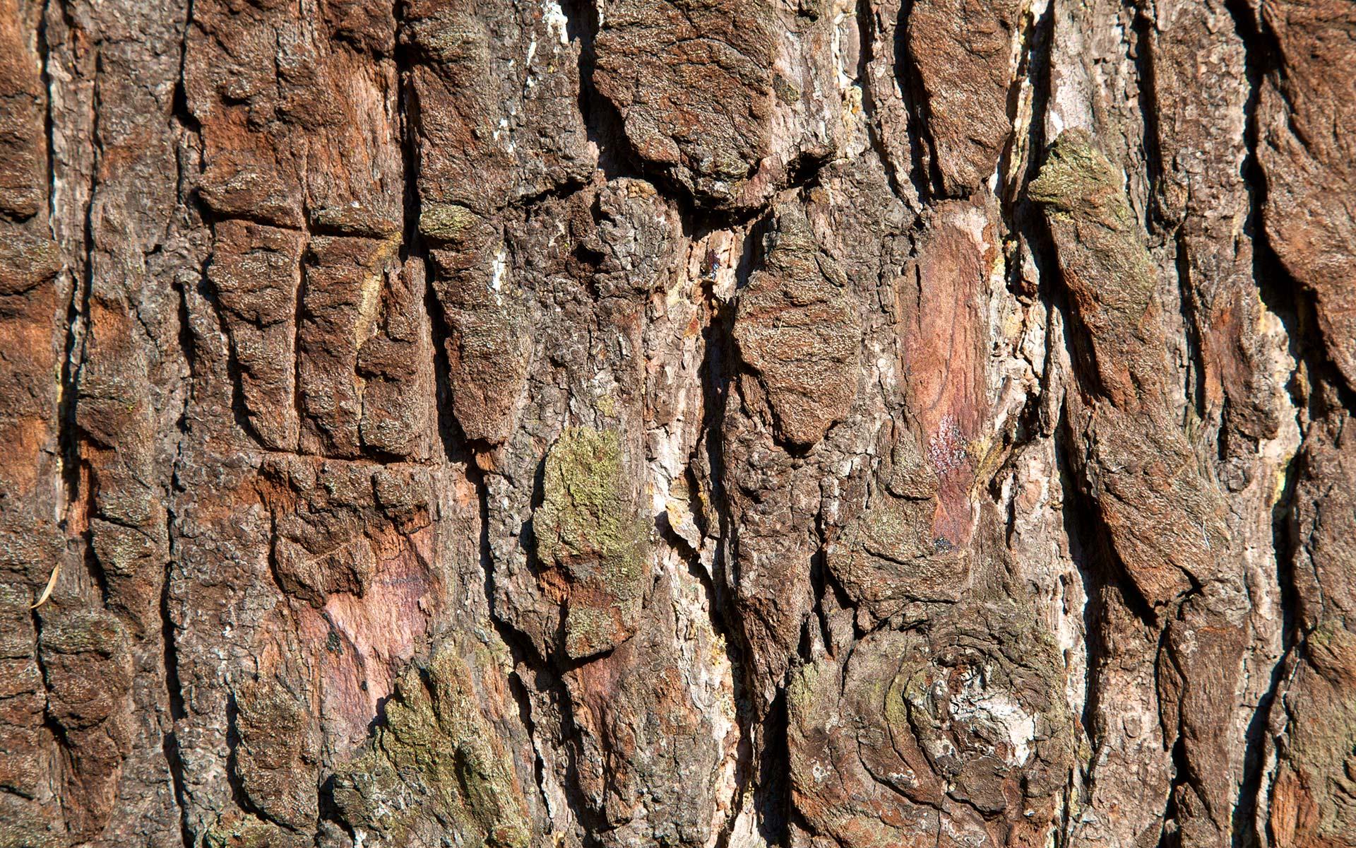 Tree Bark Desktop Wallpaper 49763 1920x1200 px ~ HDWallSource.com