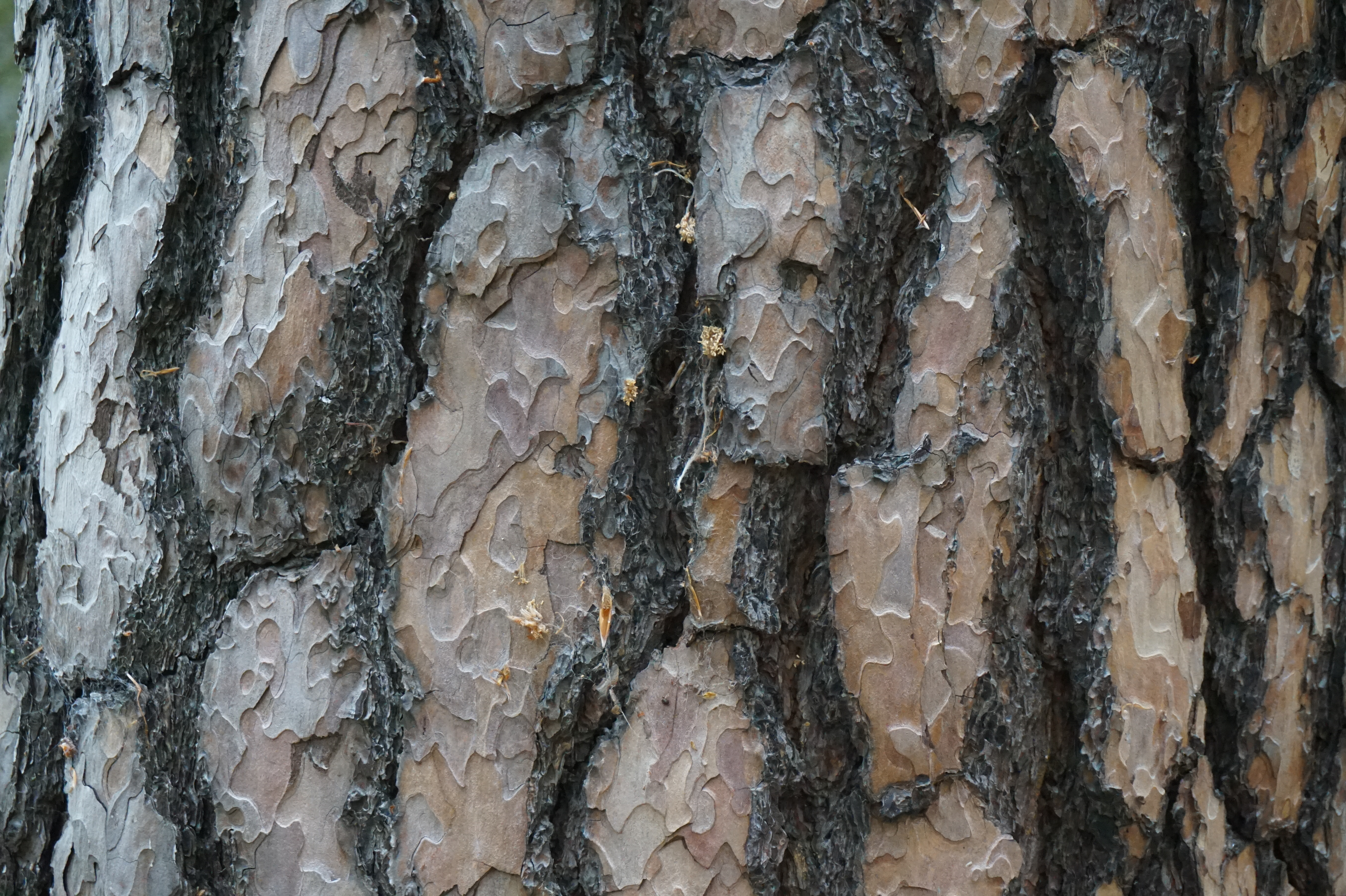 Tree Bark-002 - Nature - Texturify - Free textures