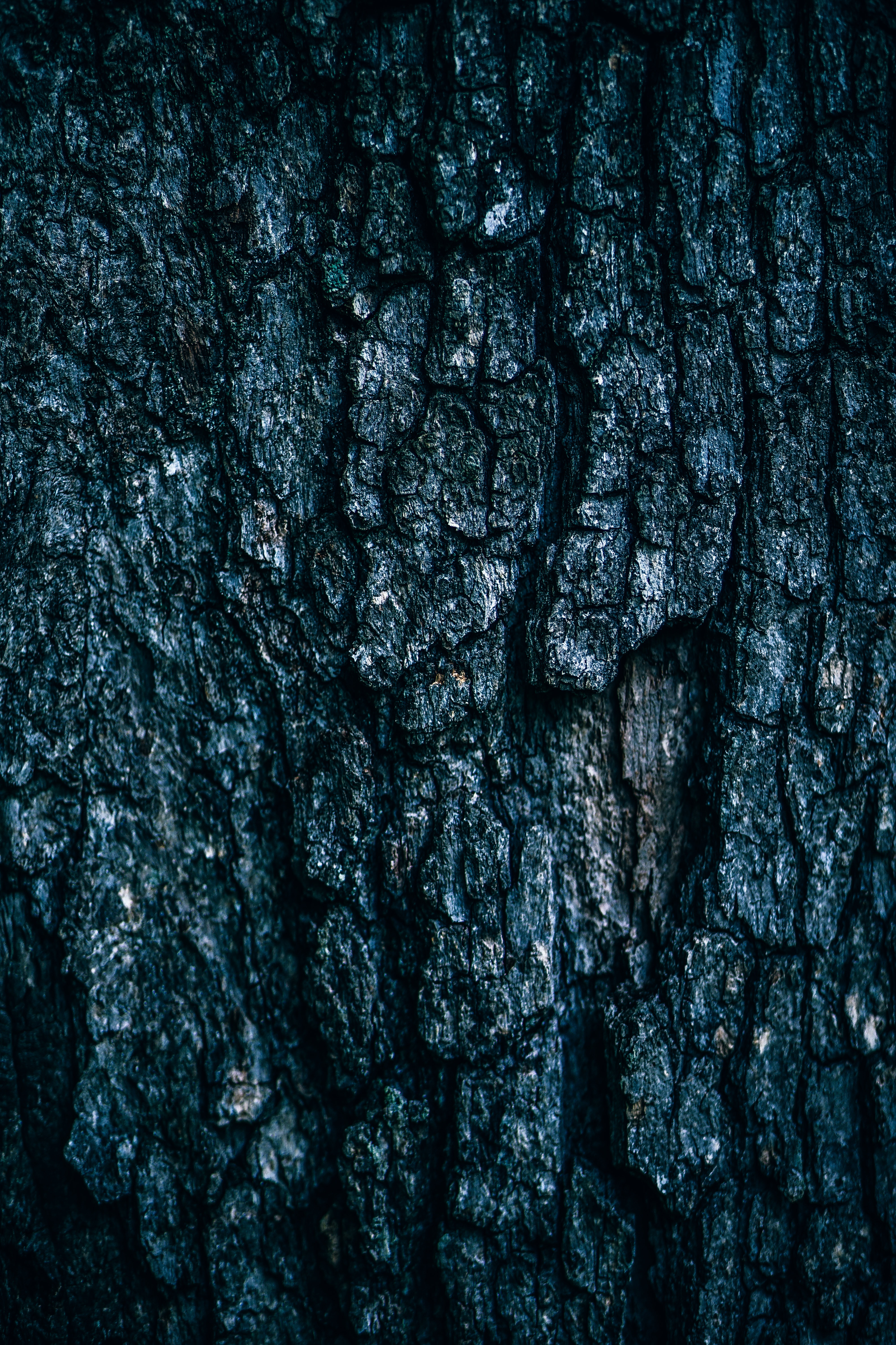 Dark Tree Bark |