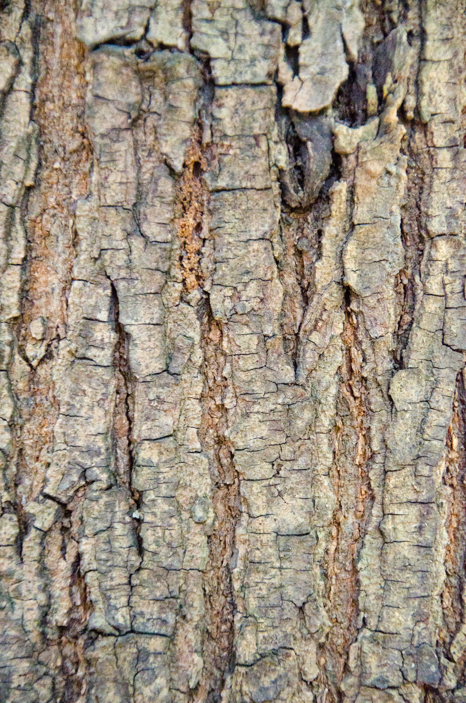 Tree Bark: Texture Pack