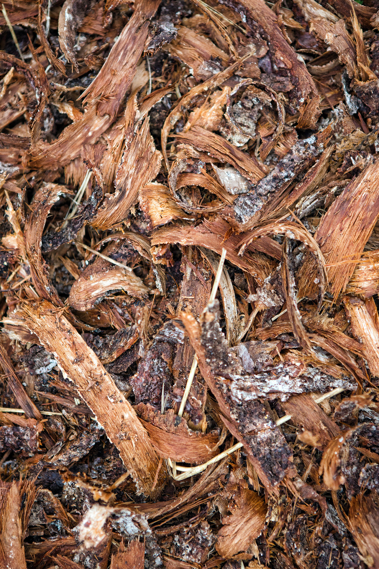 Tree bark, Plant, Random, Shredded, Pine, HQ Photo