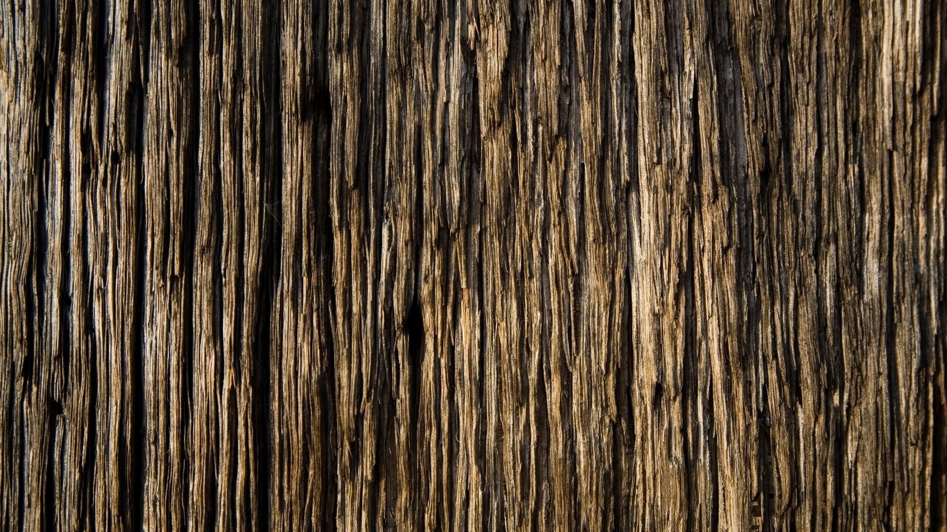 Download Wallpaper 1920x1080 bark, wood, background, texture Full HD ...