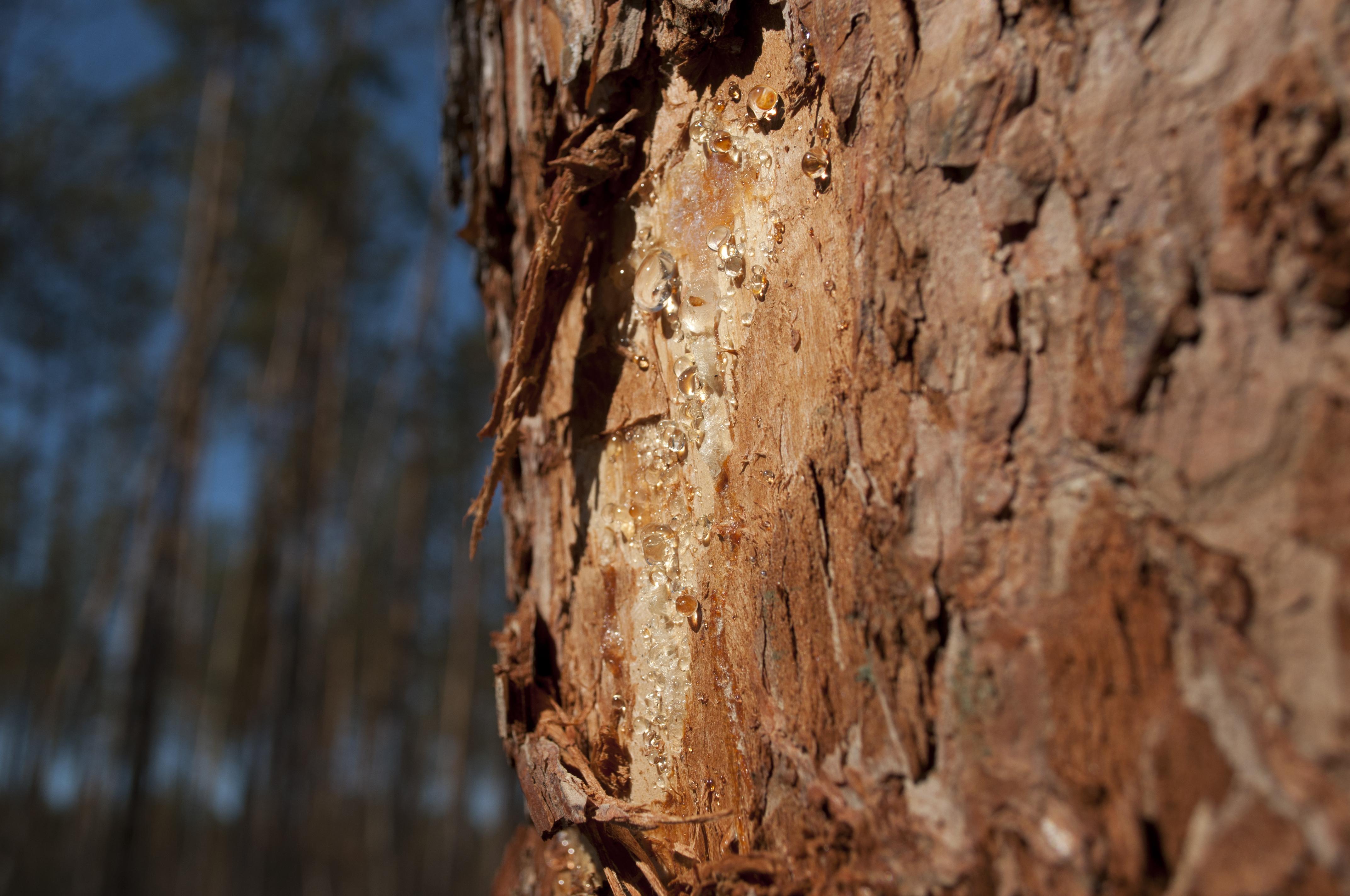 Tree Bark, Bark, Cracked, Texture, Tree, HQ Photo