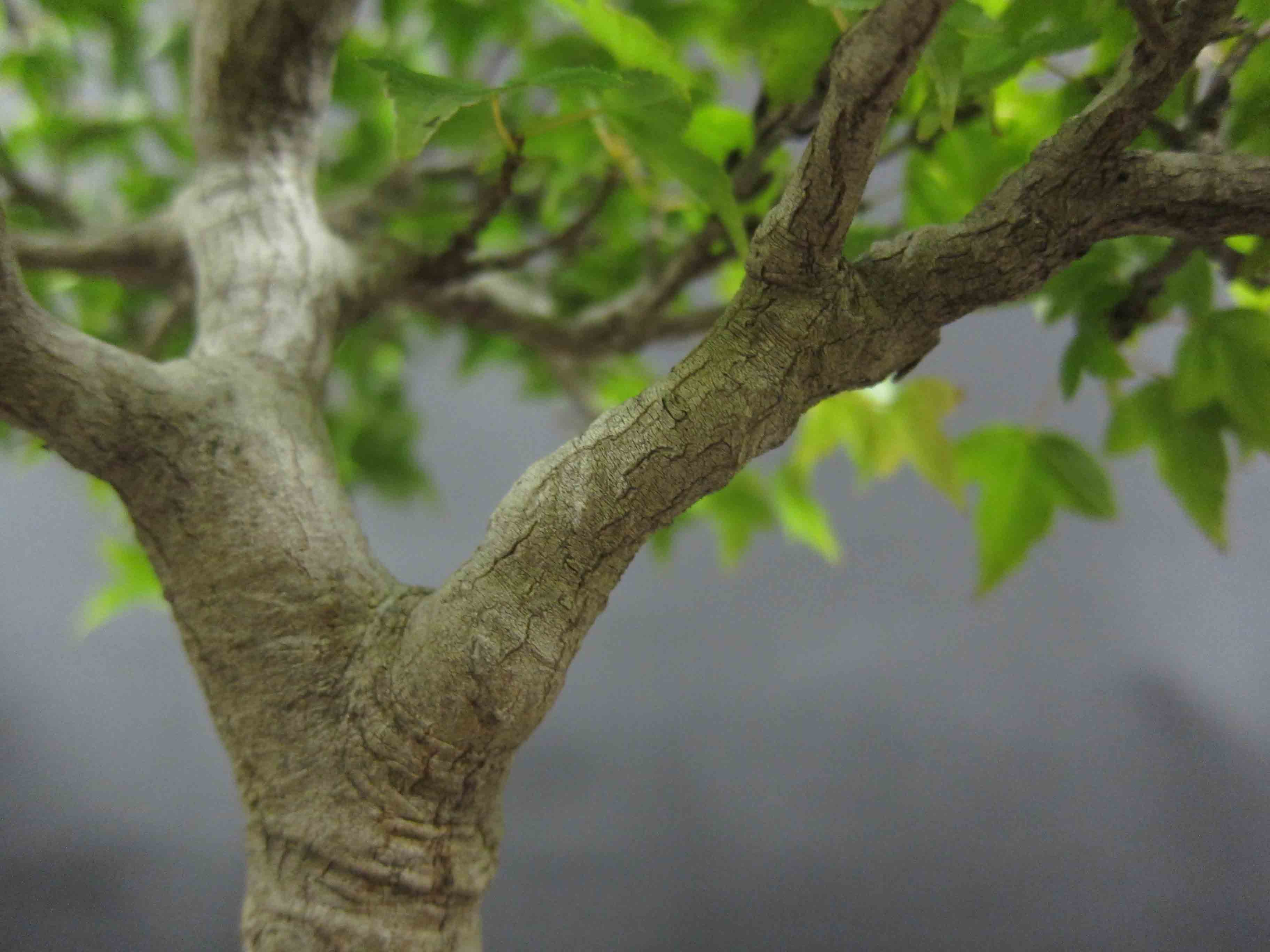 Tree Branch Group (52+)