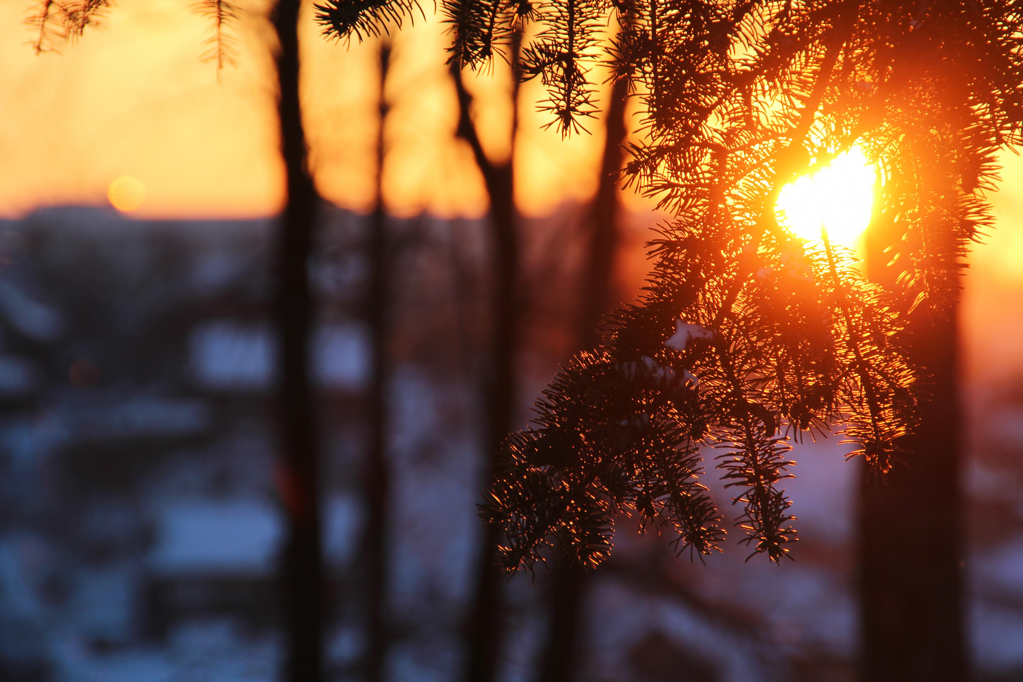 Tree branch in sunshine photo