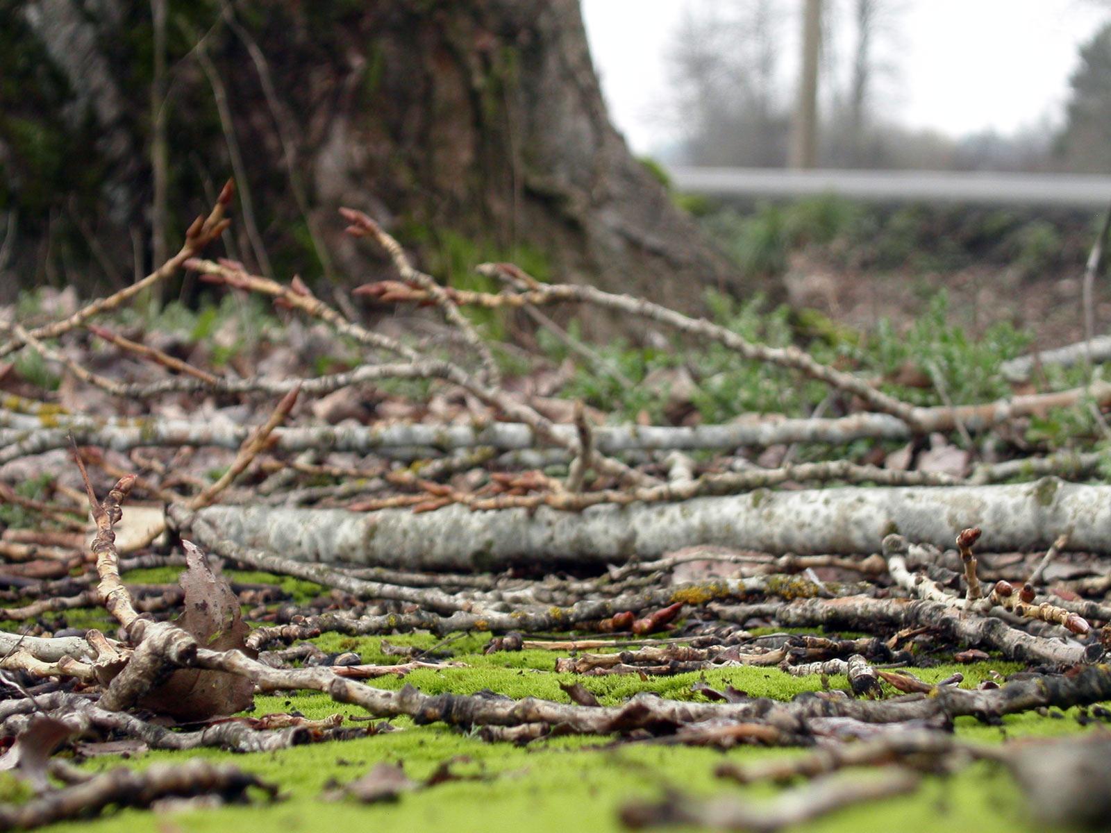 Tree branch lying on grass photo