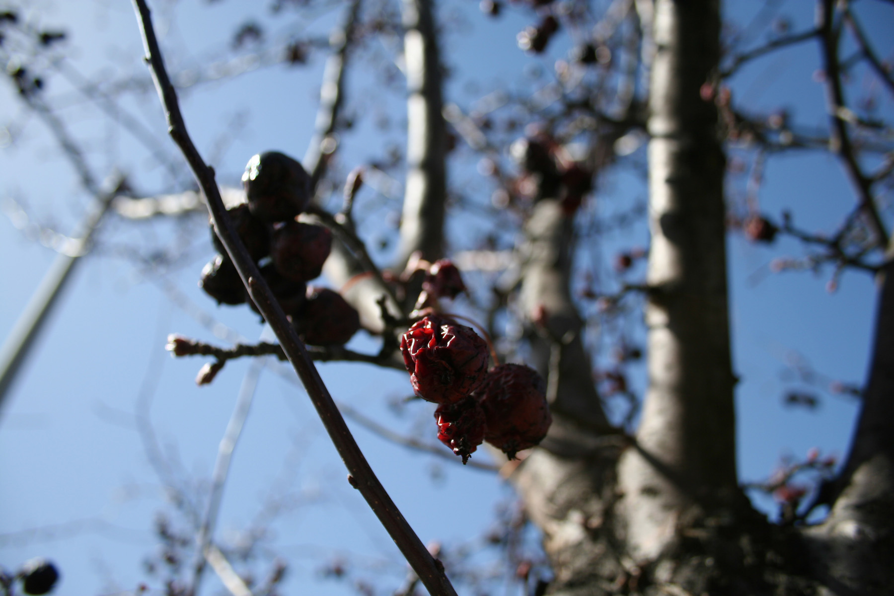 Tree branches and berries photo