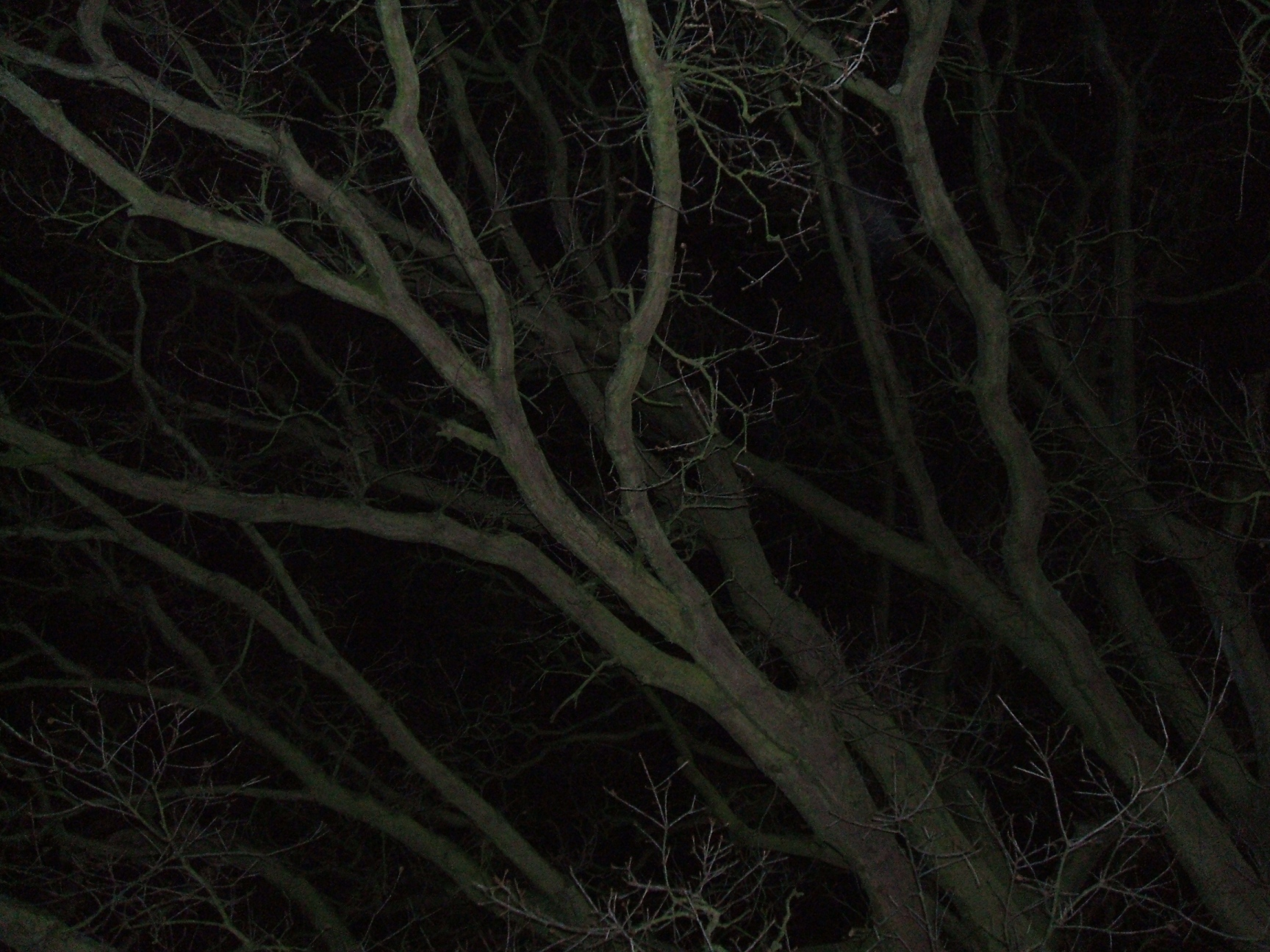 Tree branches at night photo