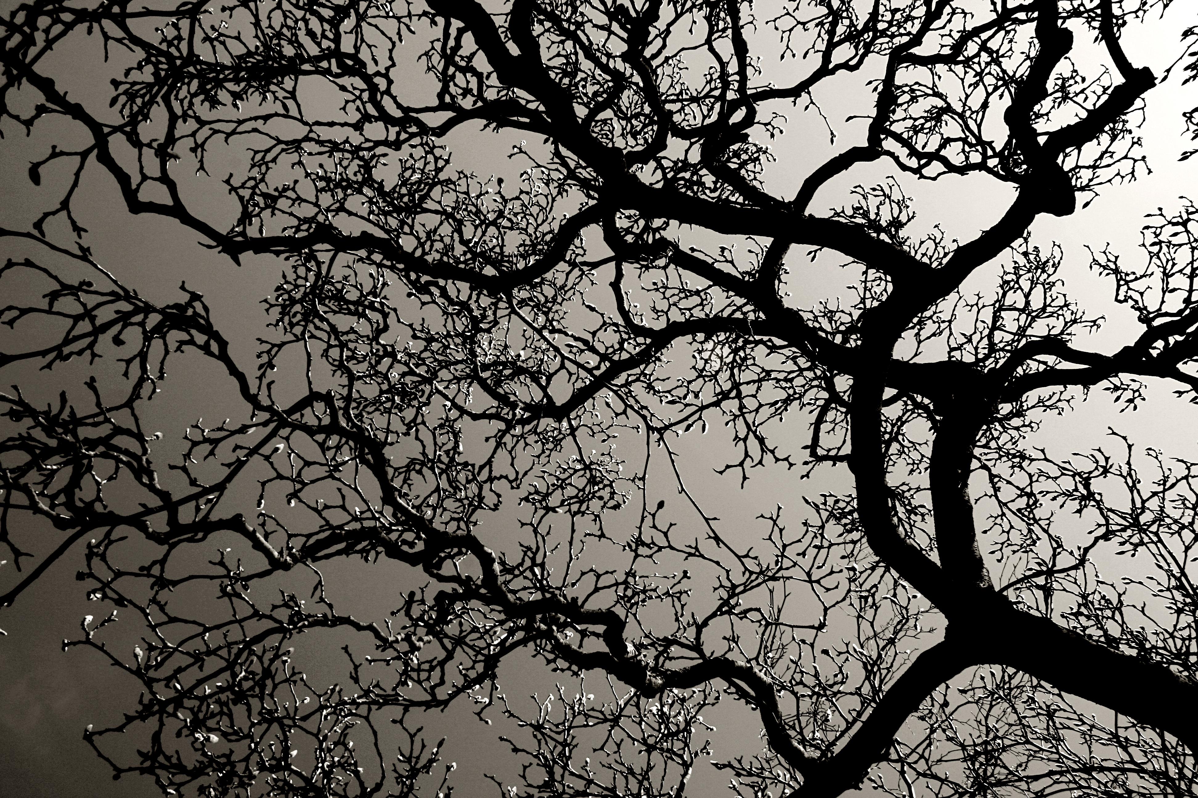 Tree branches with backlight photo
