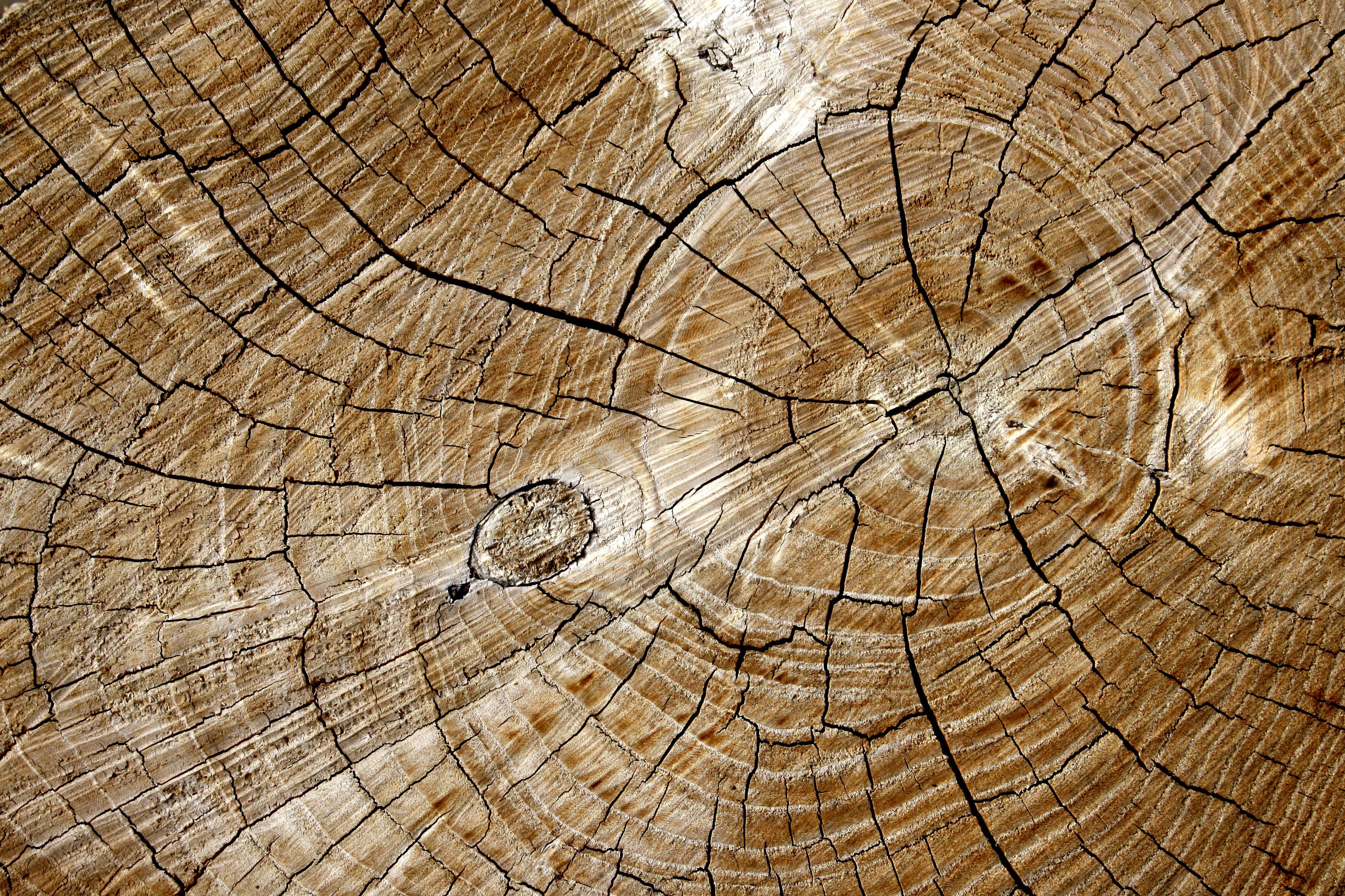 Cut End of Log with Tree Rings Texture Picture | Free Photograph ...