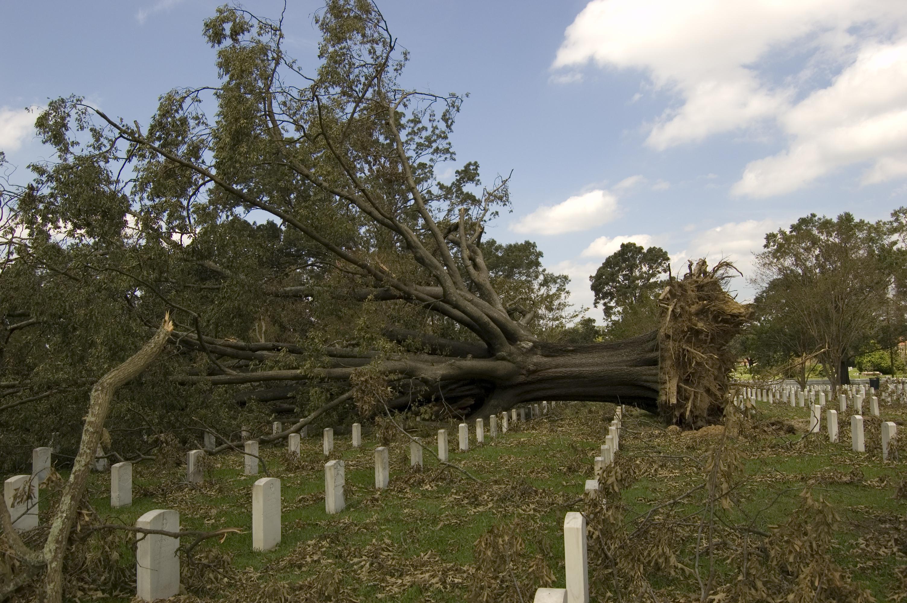 File:FEMA - 39142 - Tree blown over in a cemetery in Louisiana.jpg ...