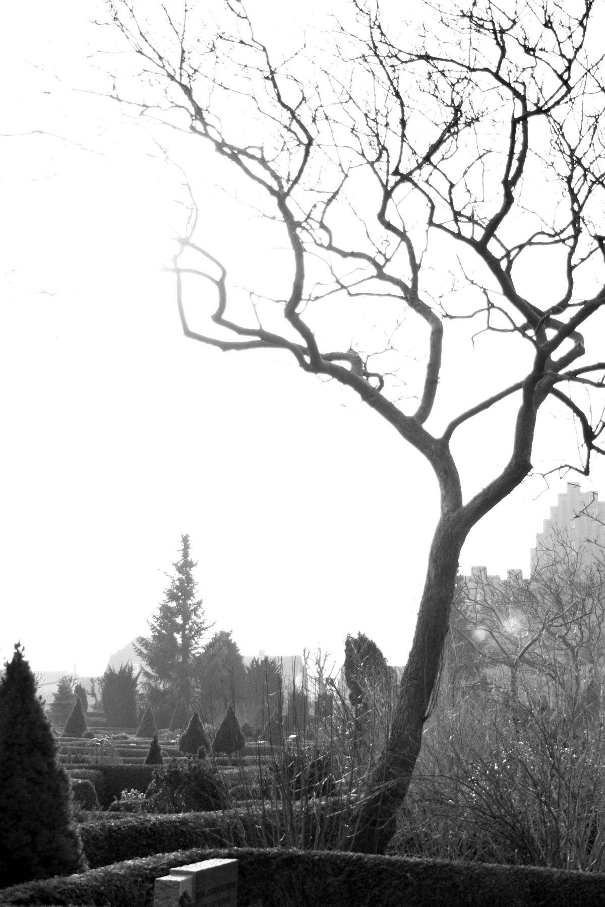 Tree in cemetary, Black, Cemetary, Church, Dead, HQ Photo