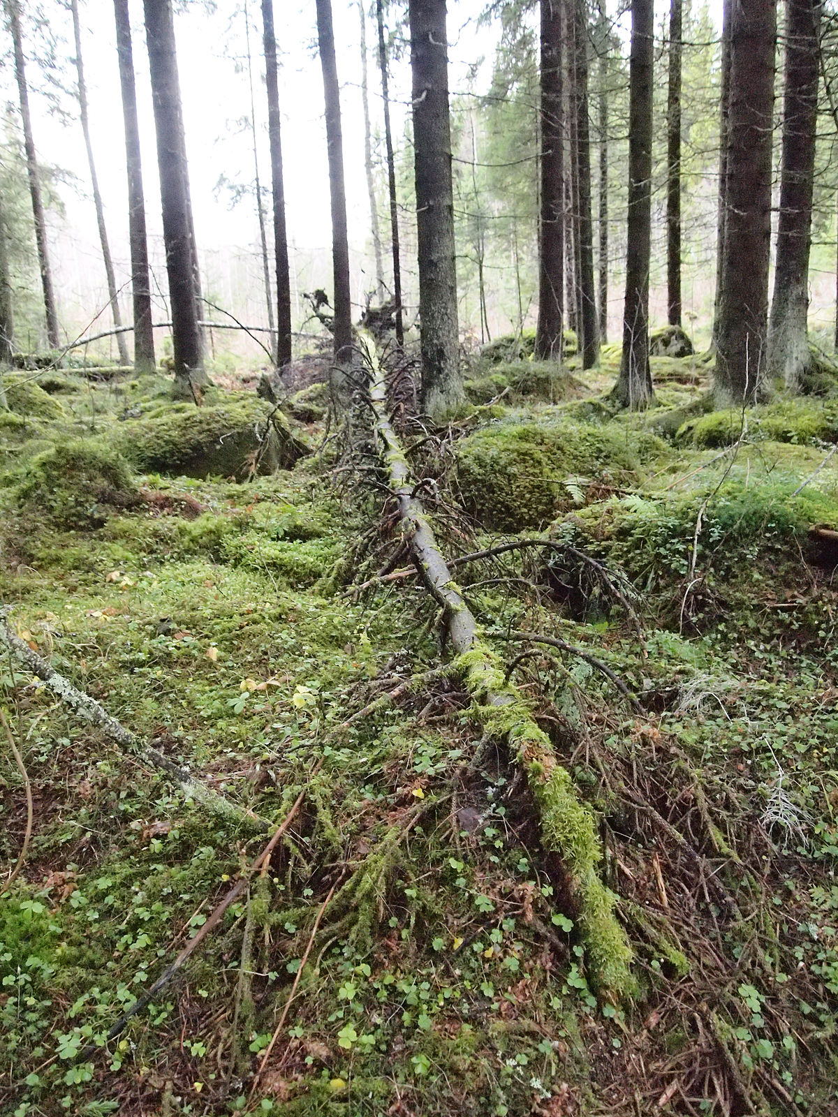 If a tree falls in a forest - Wikipedia