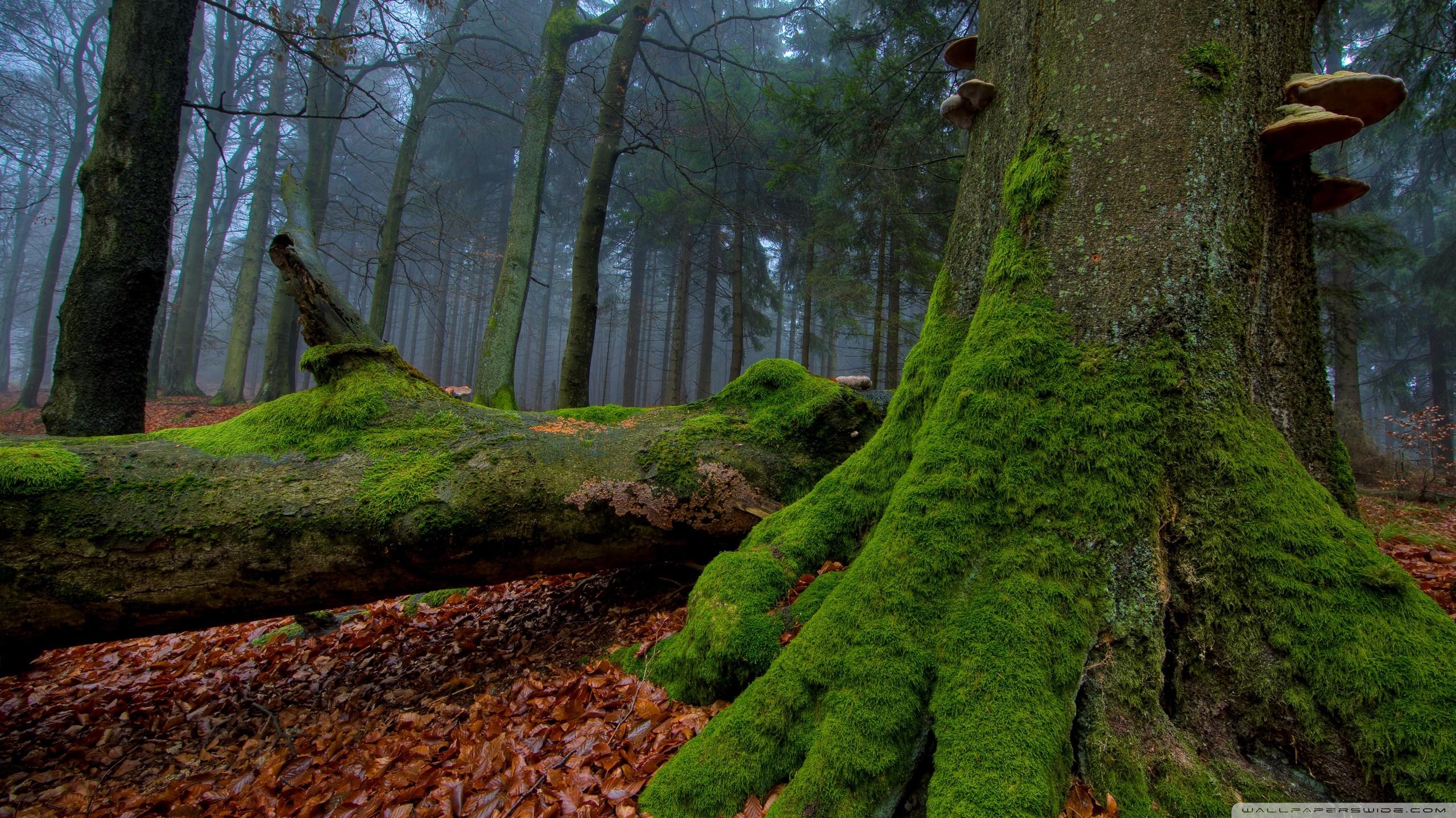 Fallen Tree In The Forest ❤ 4K HD Desktop Wallpaper for 4K Ultra HD ...