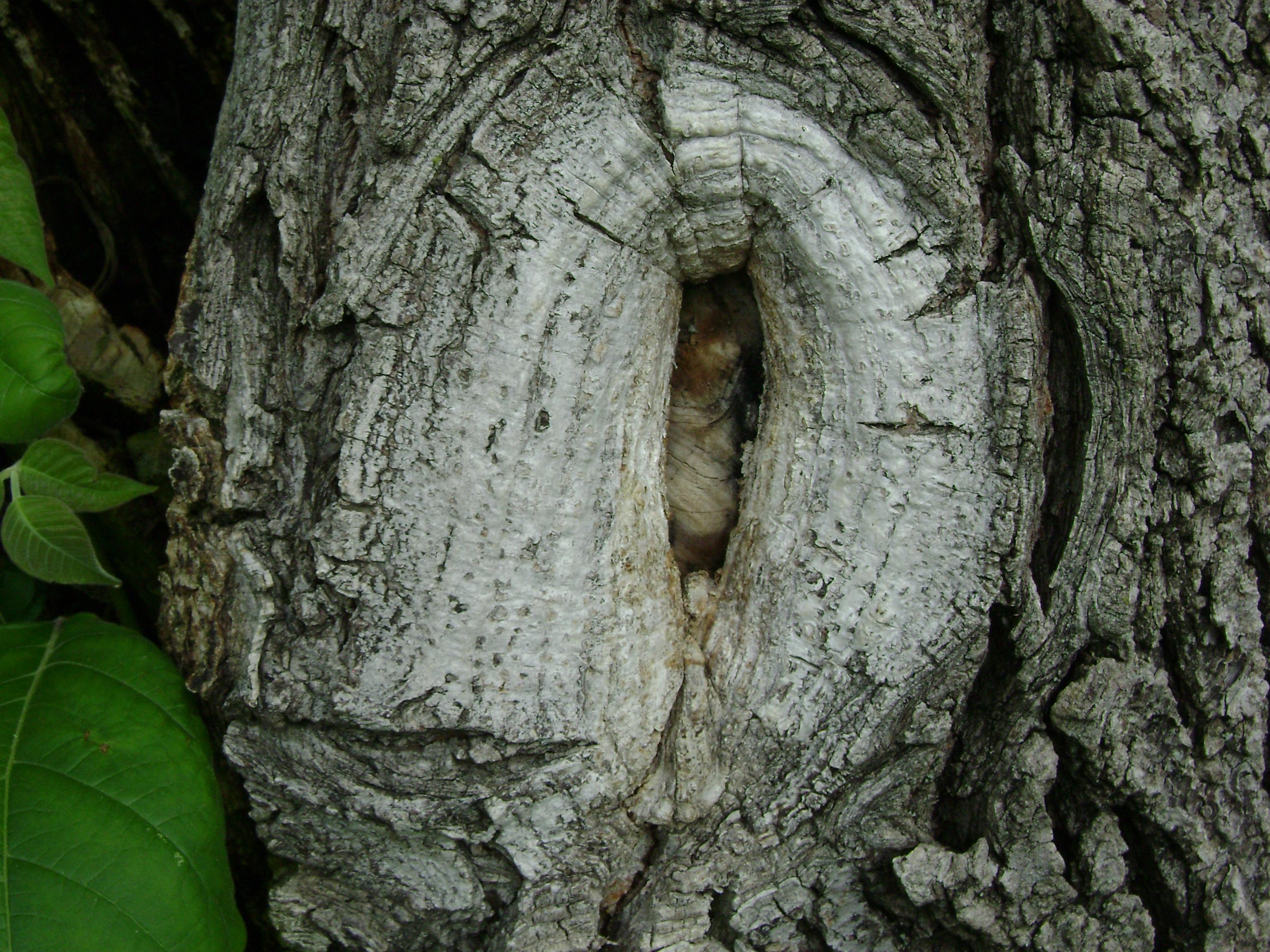 Tree Knot, Bark, Cracked, Dry, Knots, HQ Photo