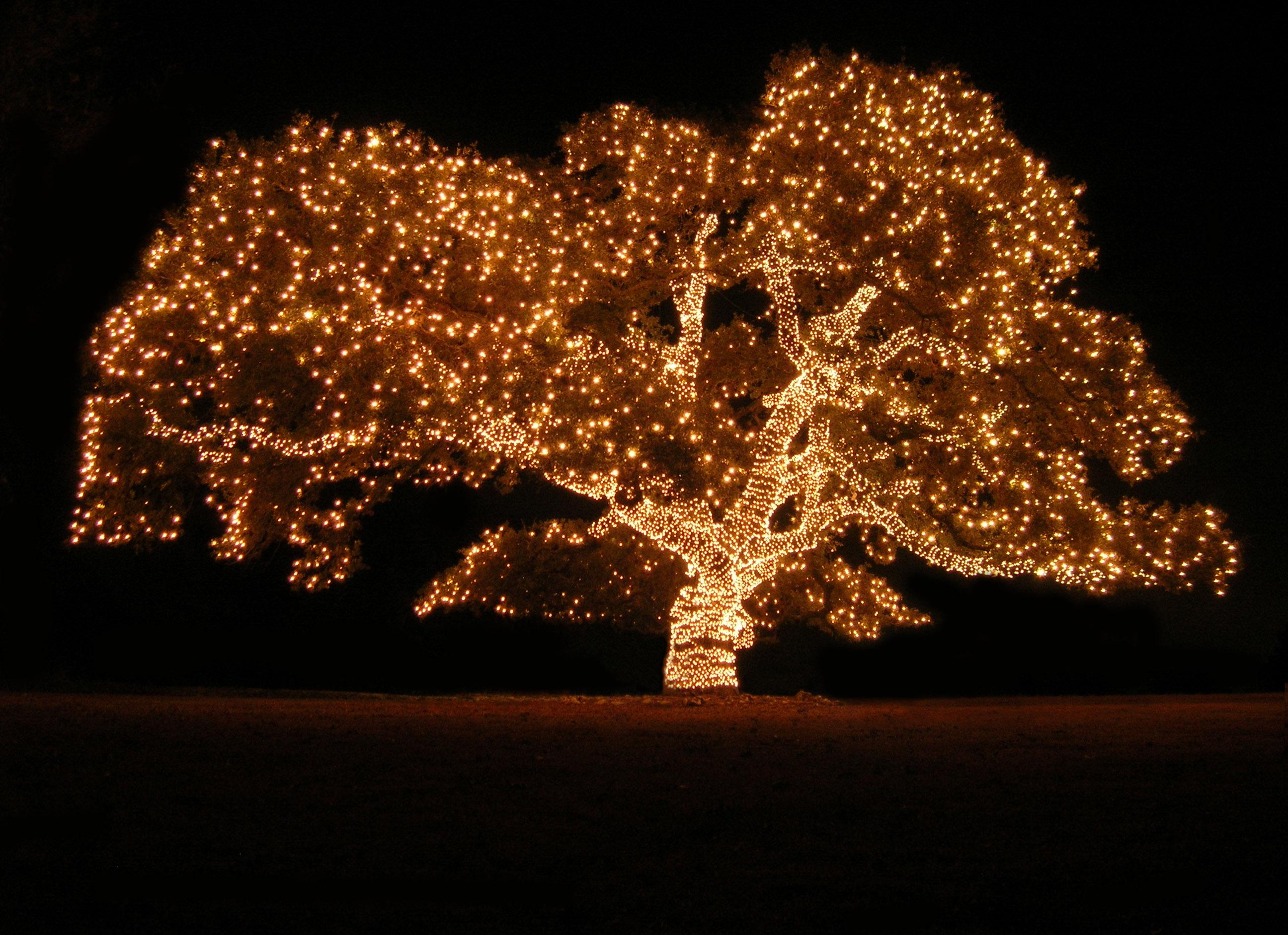 Tree lights photo